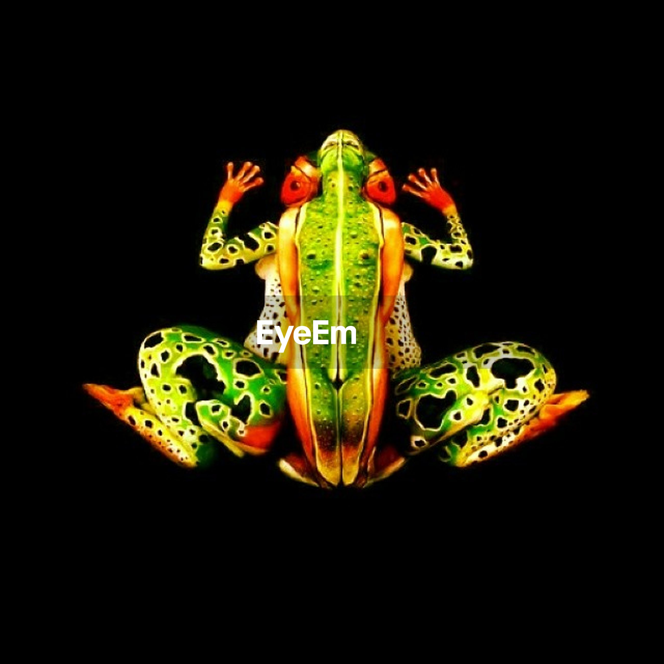 black background, studio shot, indoors, green color, copy space, night, cut out, close-up, multi colored, still life, art and craft, art, creativity, no people, yellow, animal representation, dark, decoration, green, leaf