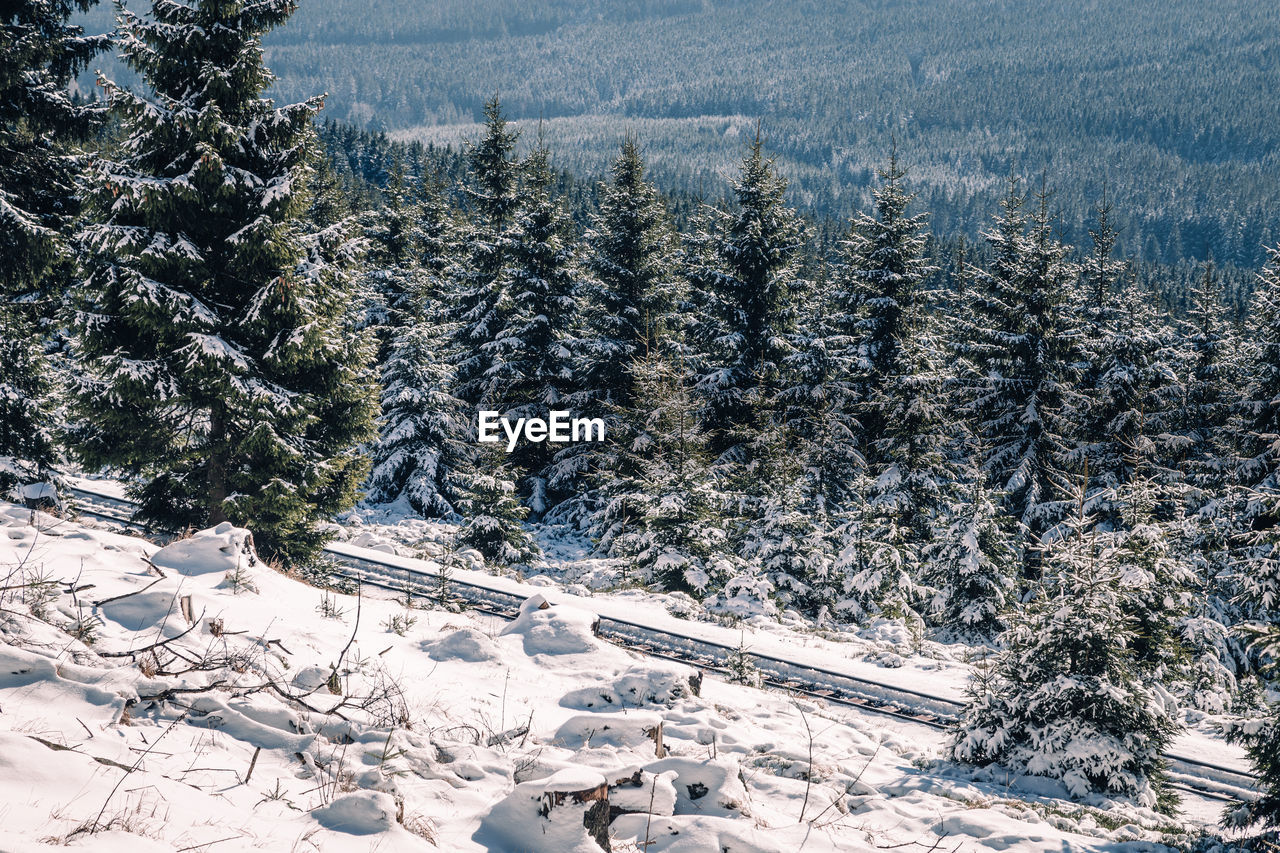 Pine Trees On Snow Covered Field