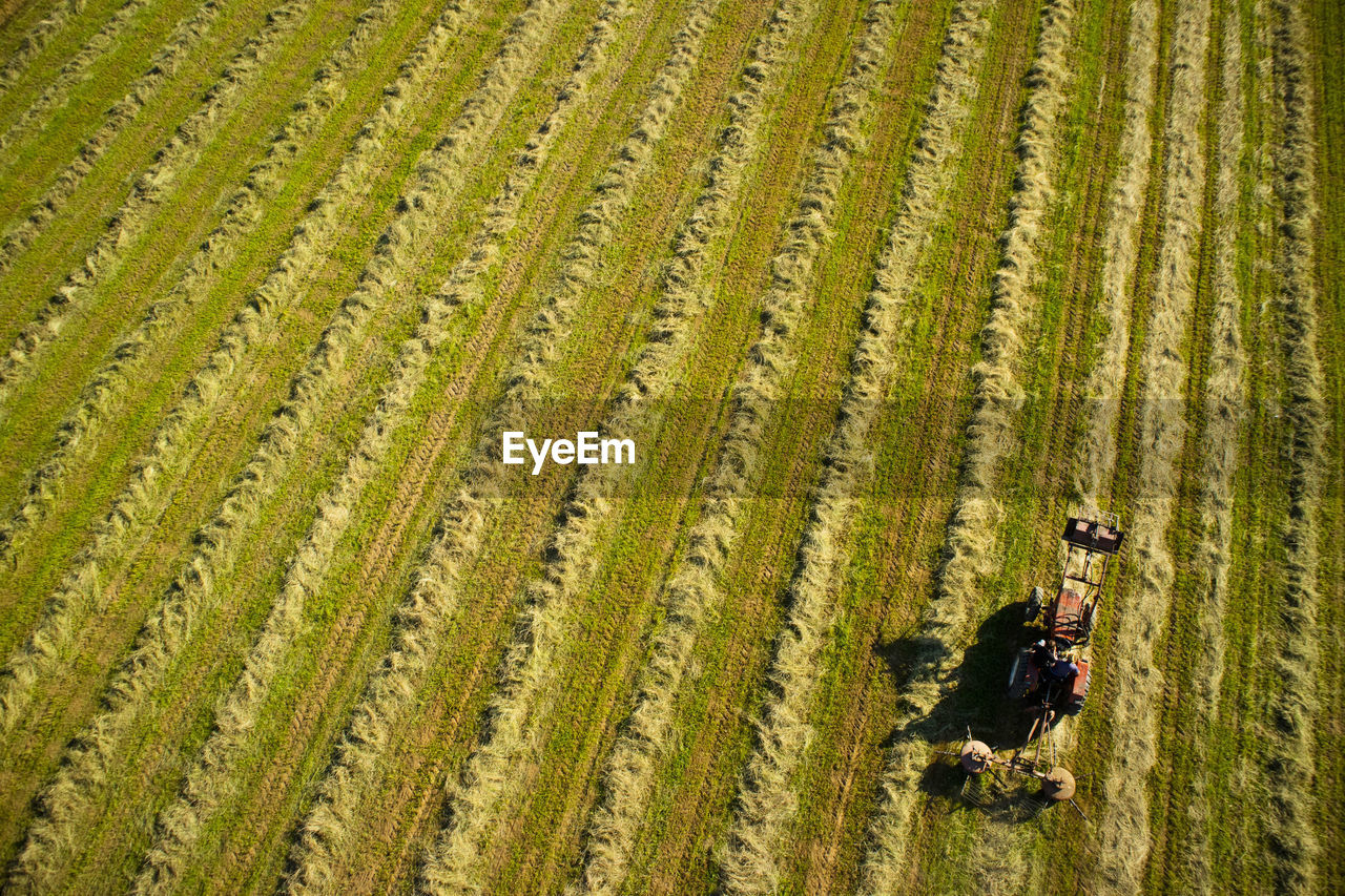 land, field, plant, agriculture, farm, landscape, environment, occupation, nature, rural scene, growth, crop, scenics - nature, working, men, one person, beauty in nature, farmer, aerial view, outdoors, farm worker