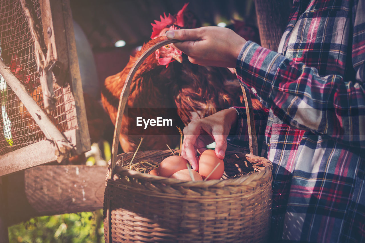 Midsection Of Person Holding Egg In Wicker Basket By Hen At Farm