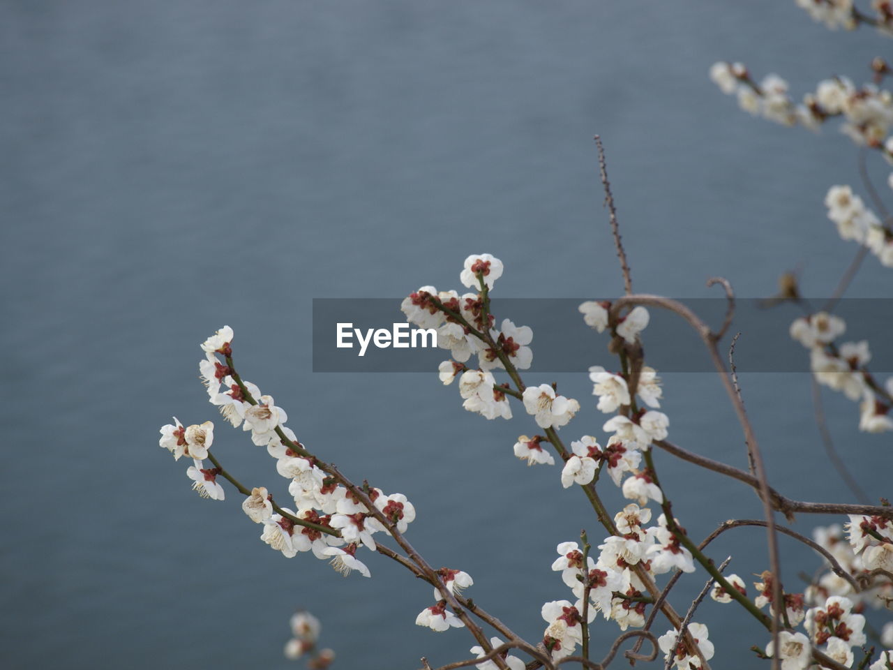 flower, flowering plant, plant, growth, fragility, beauty in nature, vulnerability, tree, nature, freshness, day, focus on foreground, no people, branch, blossom, springtime, cherry blossom, twig, outdoors, fruit tree, cherry tree, flower head