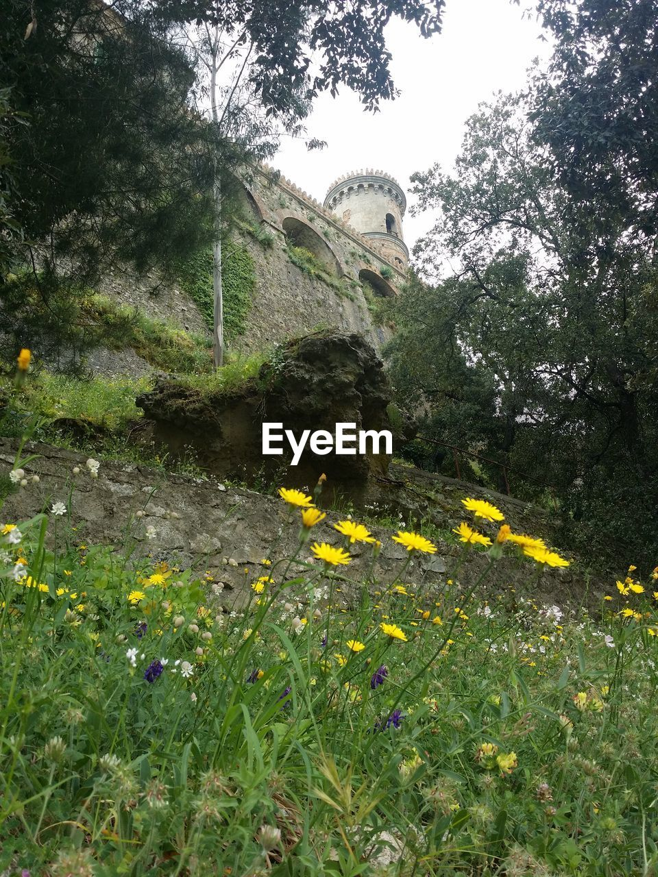 flower, growth, nature, yellow, plant, beauty in nature, outdoors, day, no people, field, scenics, freshness, green color, tree, fragility, grass, mountain, flower head, sky