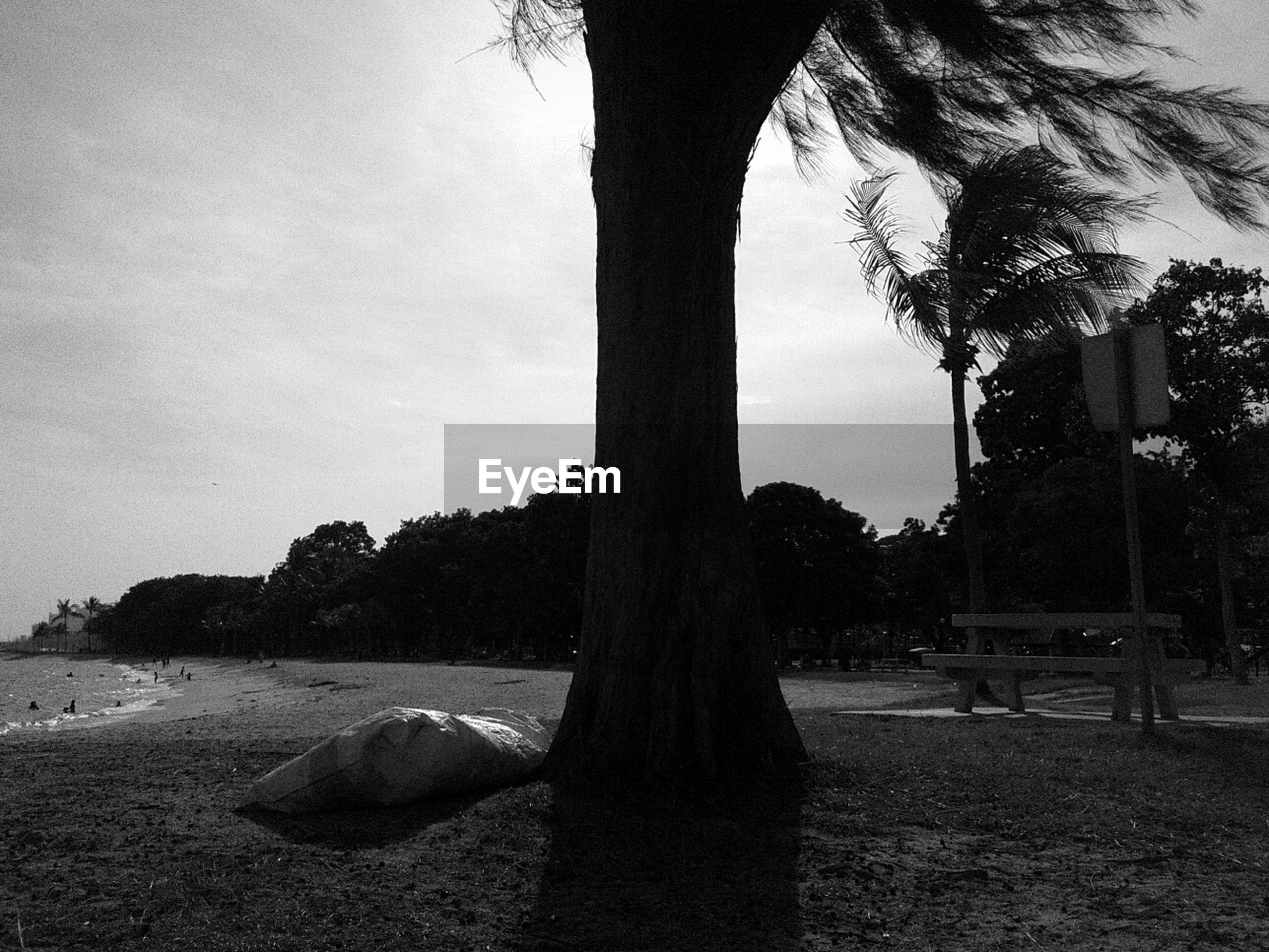 tree, tree trunk, tranquil scene, tranquility, palm tree, growth, scenics, park - man made space, nature, beauty in nature, sky, remote, solitude, outdoors, day, non-urban scene, park, shore