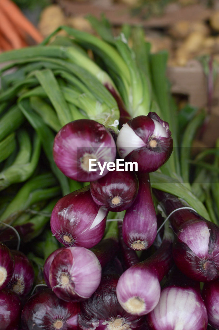 food, food and drink, freshness, vegetable, healthy eating, close-up, wellbeing, no people, market, green color, large group of objects, raw food, onion, abundance, for sale, red, day, market stall, organic, focus on foreground, purple, vegetarian food