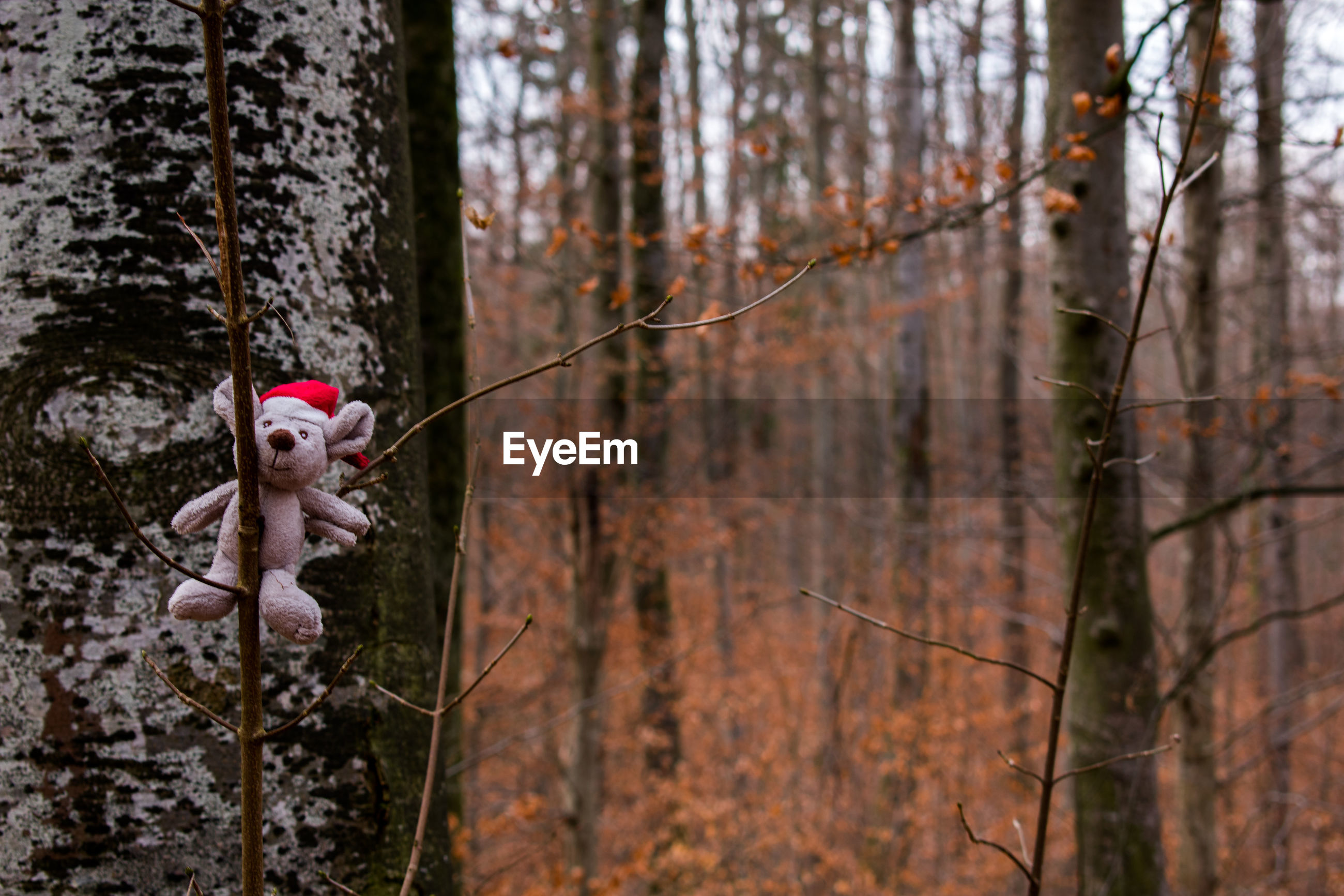 tree, forest, plant, land, tree trunk, trunk, nature, day, woodland, no people, focus on foreground, outdoors, representation, toy, branch, fun, full length