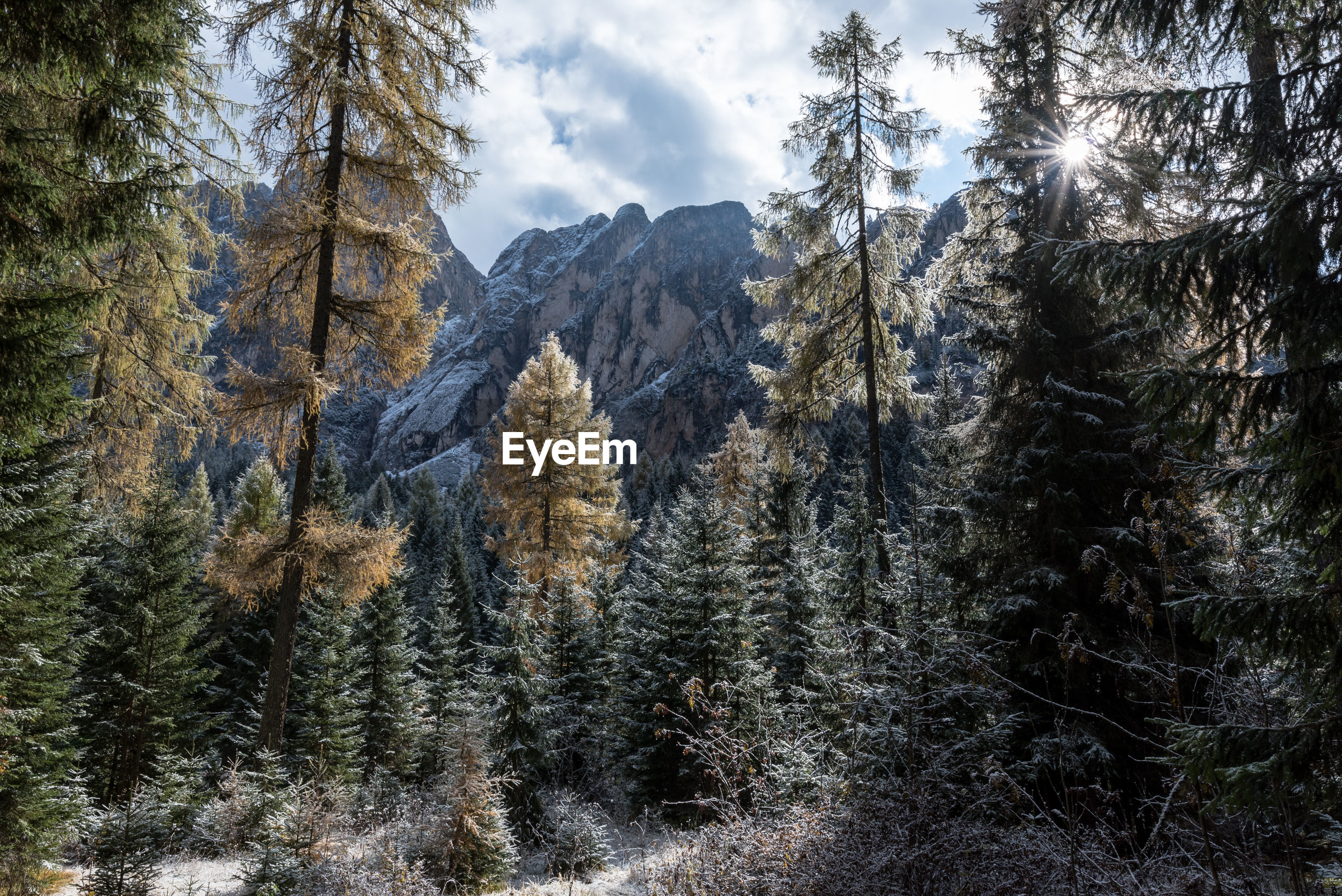 Trees on field against mountains on sunny day during winter