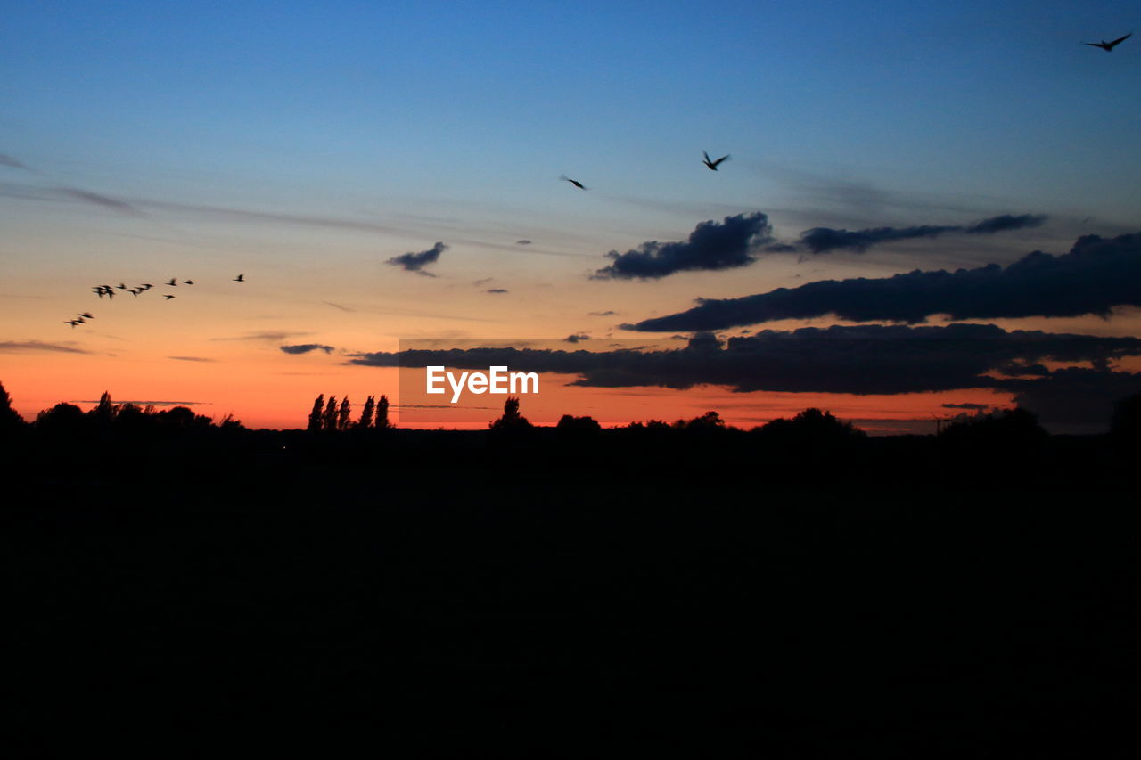 sunset, silhouette, flying, nature, beauty in nature, bird, sky, scenics, animals in the wild, tranquil scene, animal themes, tranquility, outdoors, no people, large group of animals, landscape, togetherness