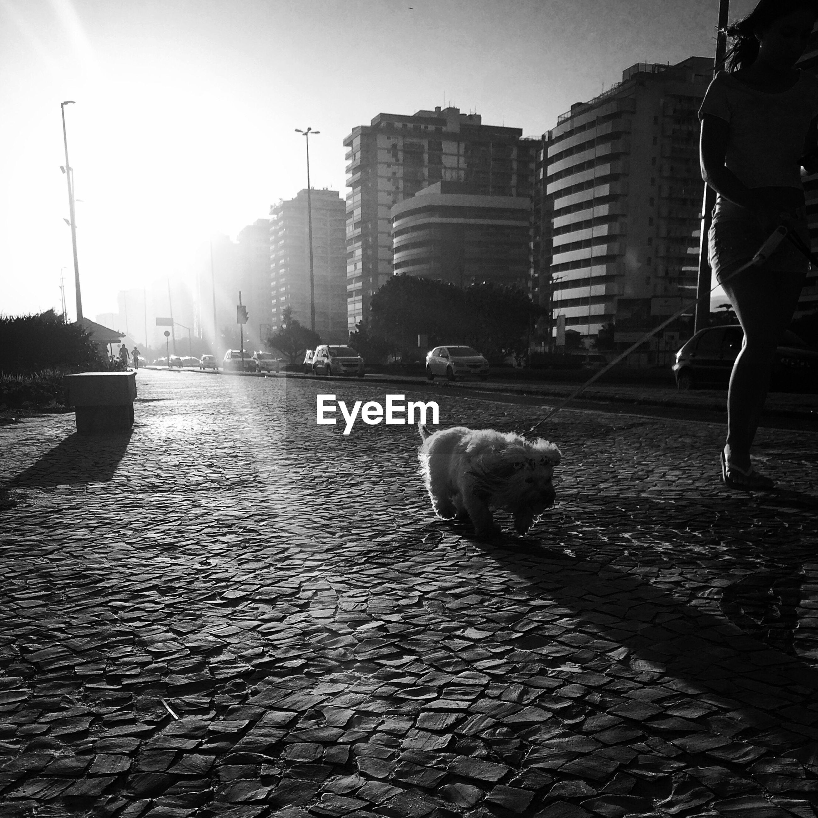 VIEW OF A DOG IN CITY