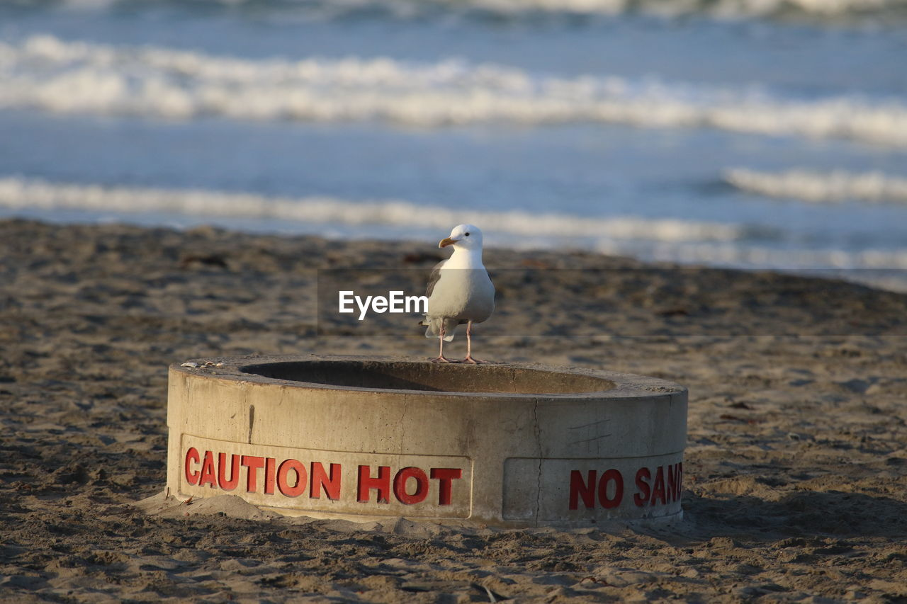 Seagull Perching On Concrete Pipe With Text At Beach