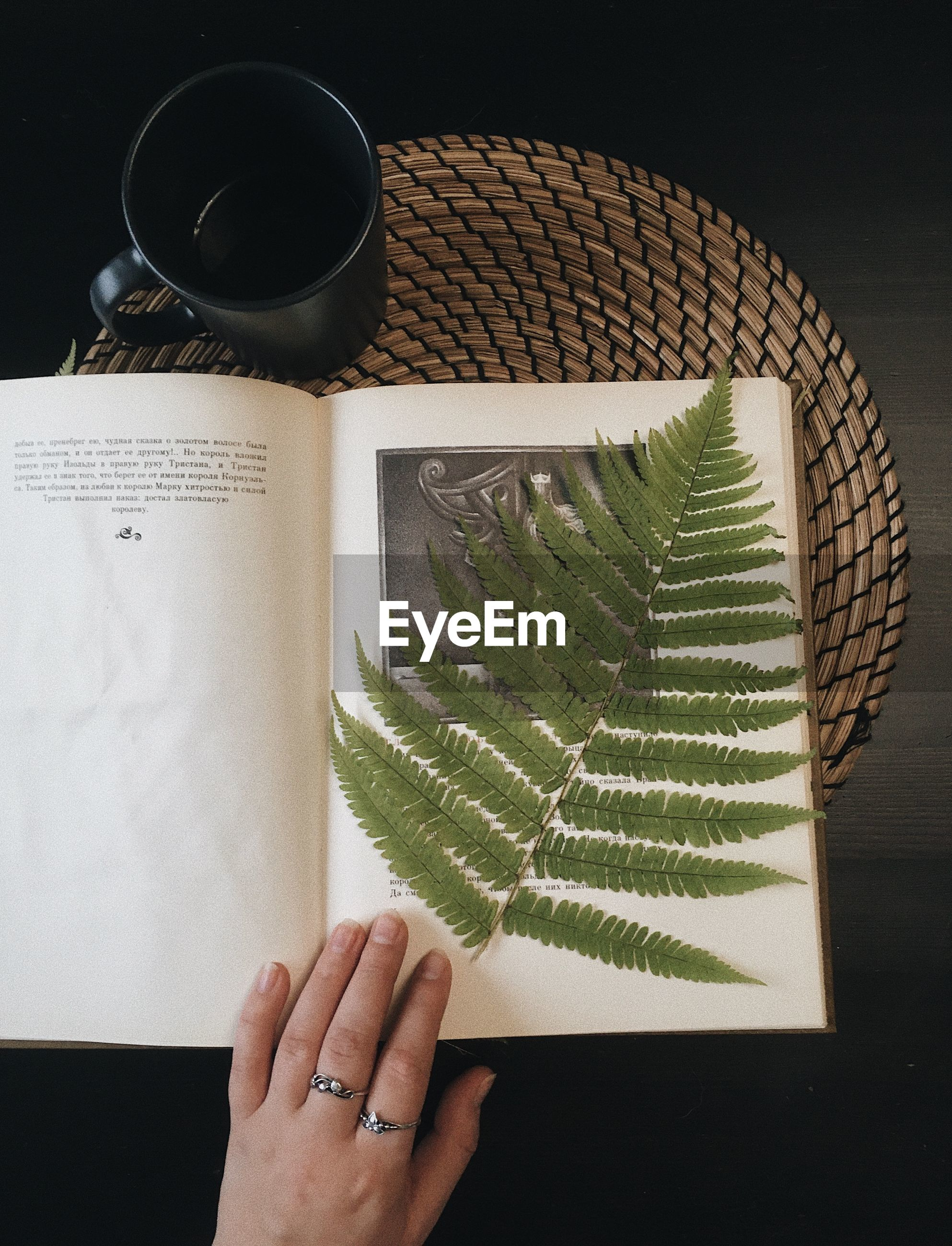 Cropped hand holding leaves on book