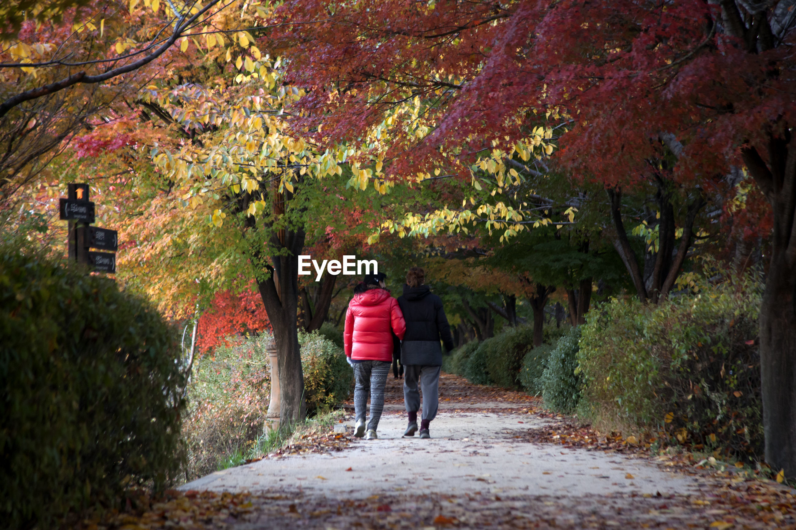 Rear view of women walking on road amidst trees at public park during autumn