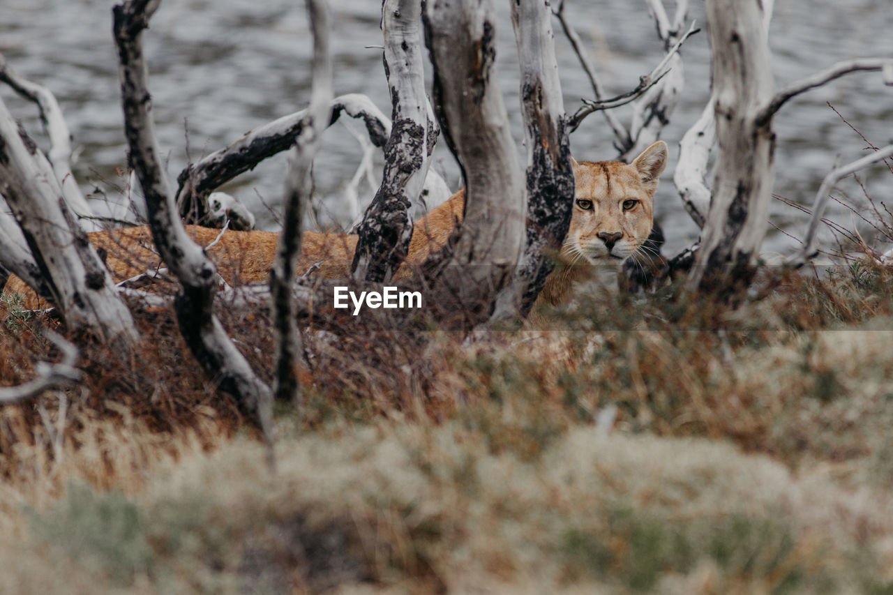 mammal, animal, animal themes, land, animals in the wild, selective focus, animal wildlife, tree, no people, one animal, nature, day, field, deer, plant, vertebrate, winter, snow, cold temperature, outdoors