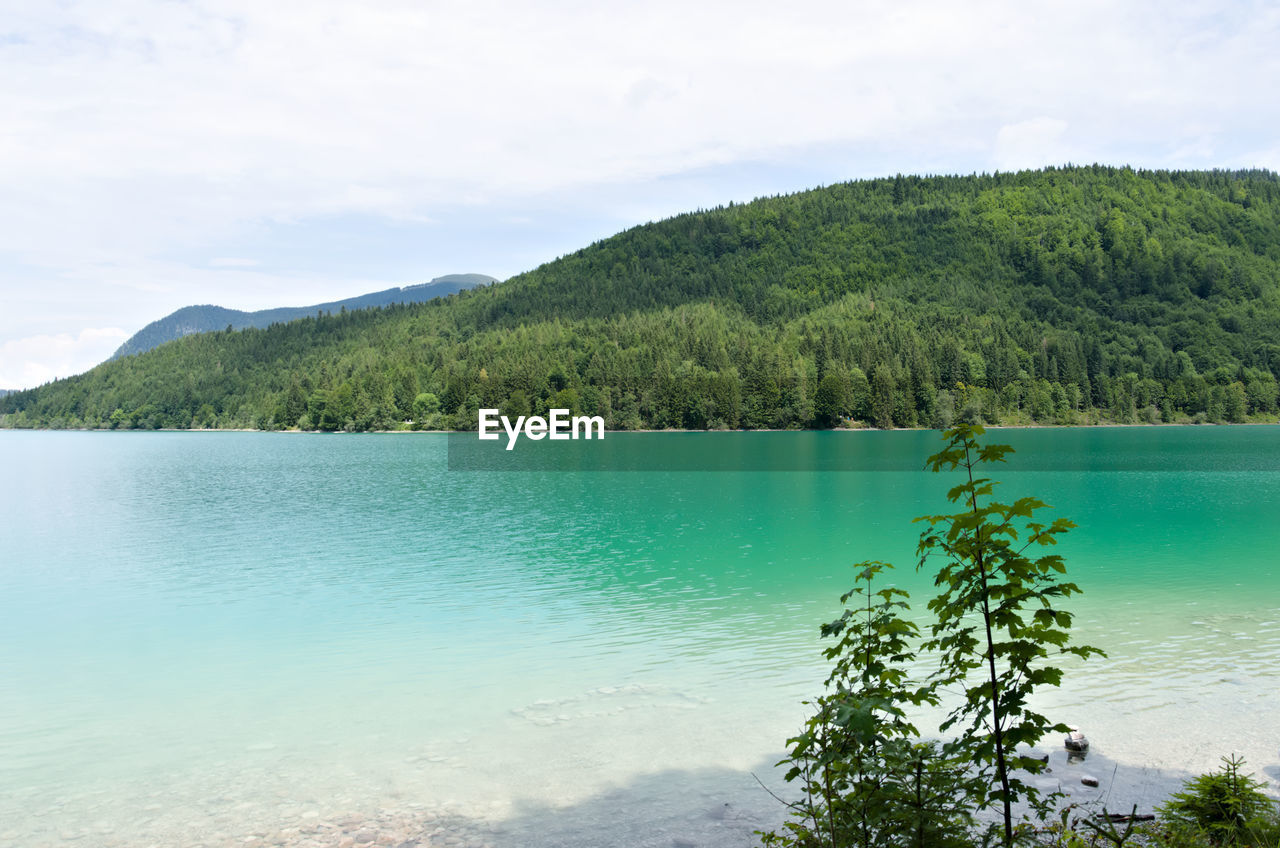 water, beauty in nature, scenics - nature, tranquil scene, tree, tranquility, plant, sky, cloud - sky, mountain, nature, green color, lake, day, growth, non-urban scene, no people, idyllic, outdoors, turquoise colored