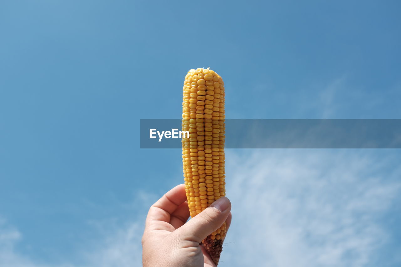 Cropped Hand Of Man Holding Sweetcorn Against Sky