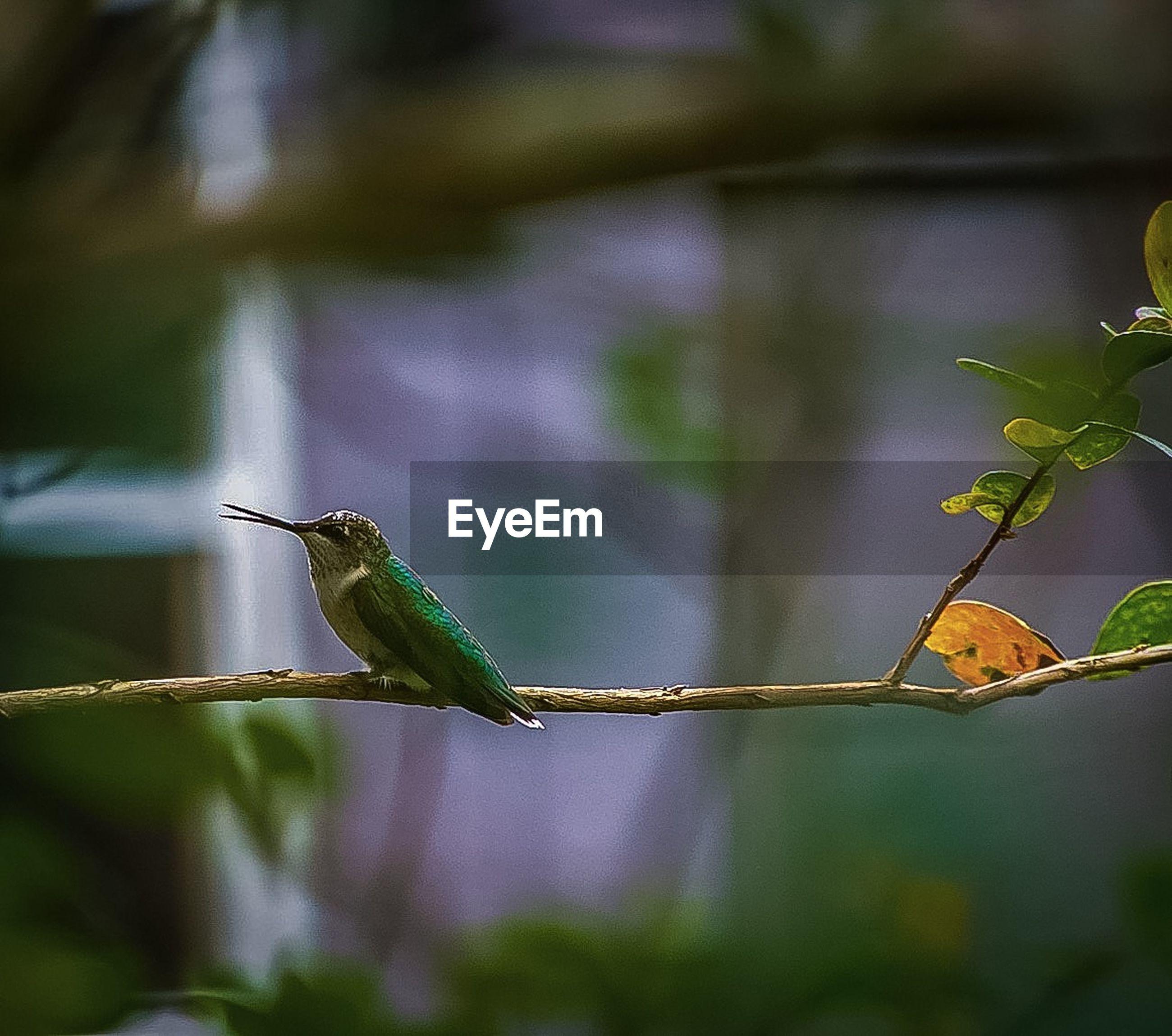 BIRD PERCHING ON STEM