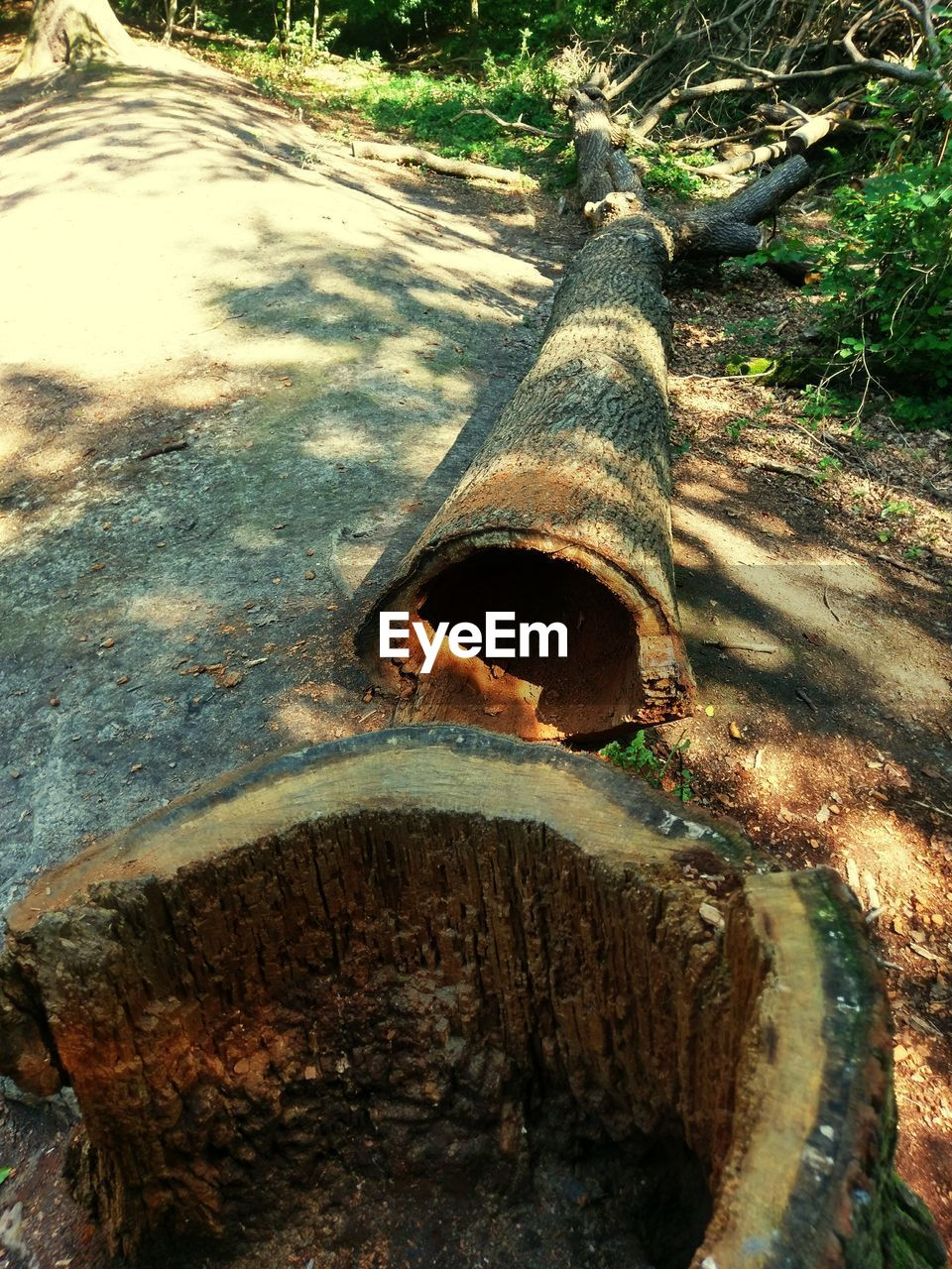 water, day, no people, high angle view, outdoors, sewer, sewage, close-up, nature, tree