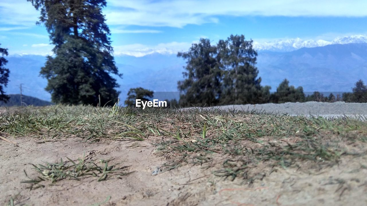nature, tree, day, growth, sky, outdoors, tranquility, no people, scenics, beauty in nature, landscape, tranquil scene, plant, mountain, grass, close-up