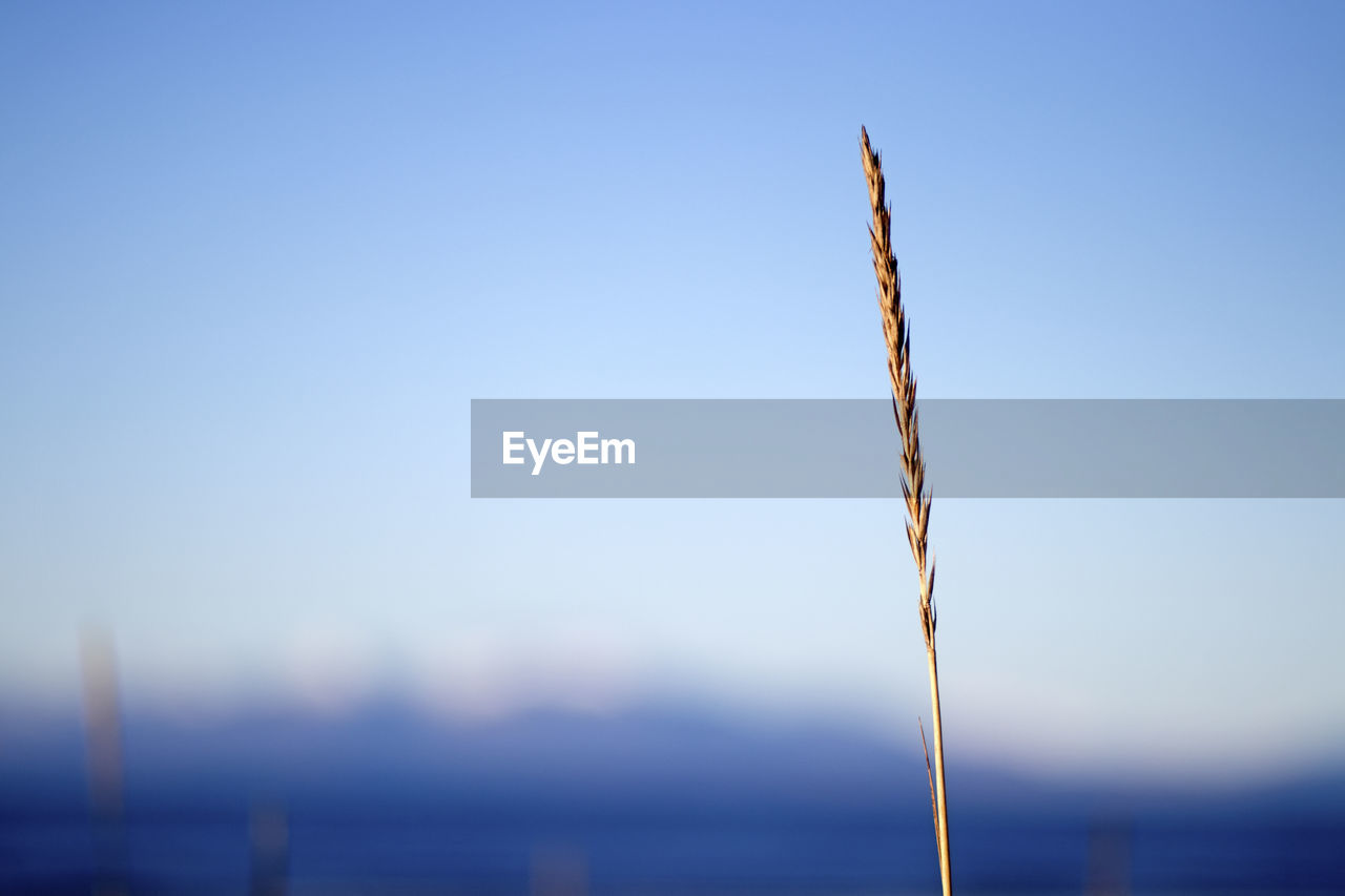 sky, focus on foreground, nature, no people, beauty in nature, tranquility, blue, growth, plant, day, close-up, copy space, clear sky, outdoors, tranquil scene, plant stem, scenics - nature, sunlight, water, environment, stalk