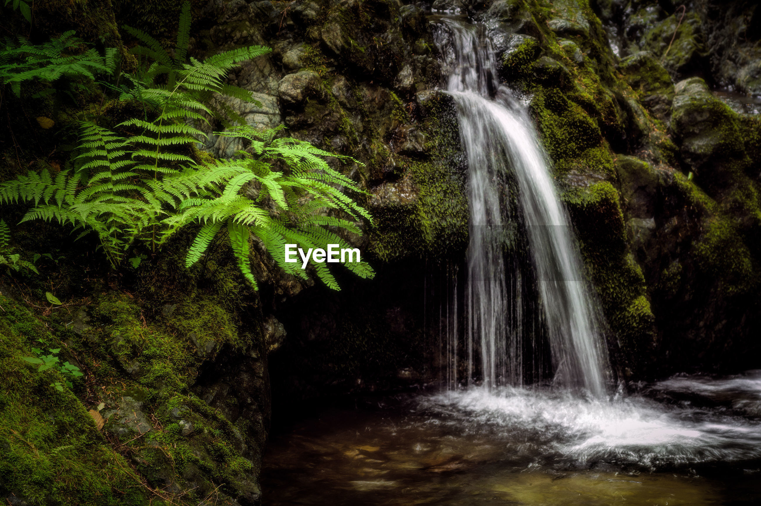 SCENIC VIEW OF WATERFALL IN FOREST AT NIGHT