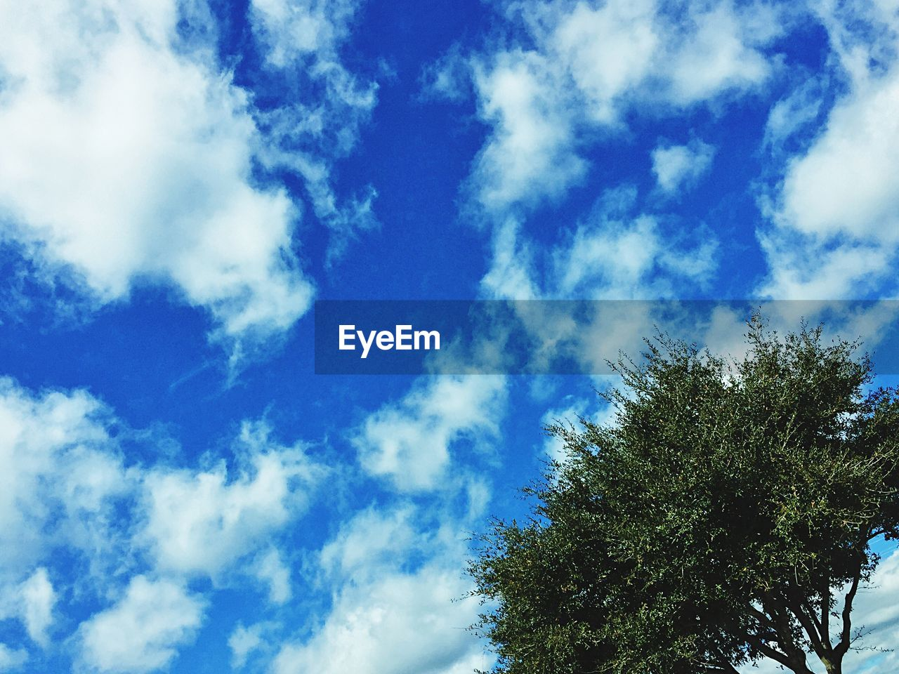 Low angle view of tree against cloudy blue sky