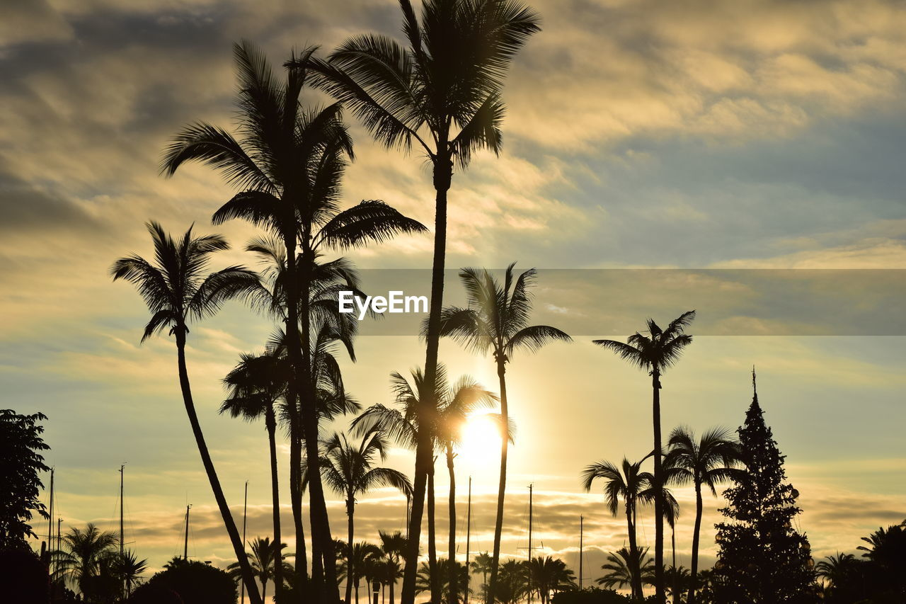 palm tree, tree, sunset, sky, nature, cloud - sky, beauty in nature, scenics, silhouette, sun, tranquility, growth, tranquil scene, tree trunk, outdoors, no people, beach, sea, day