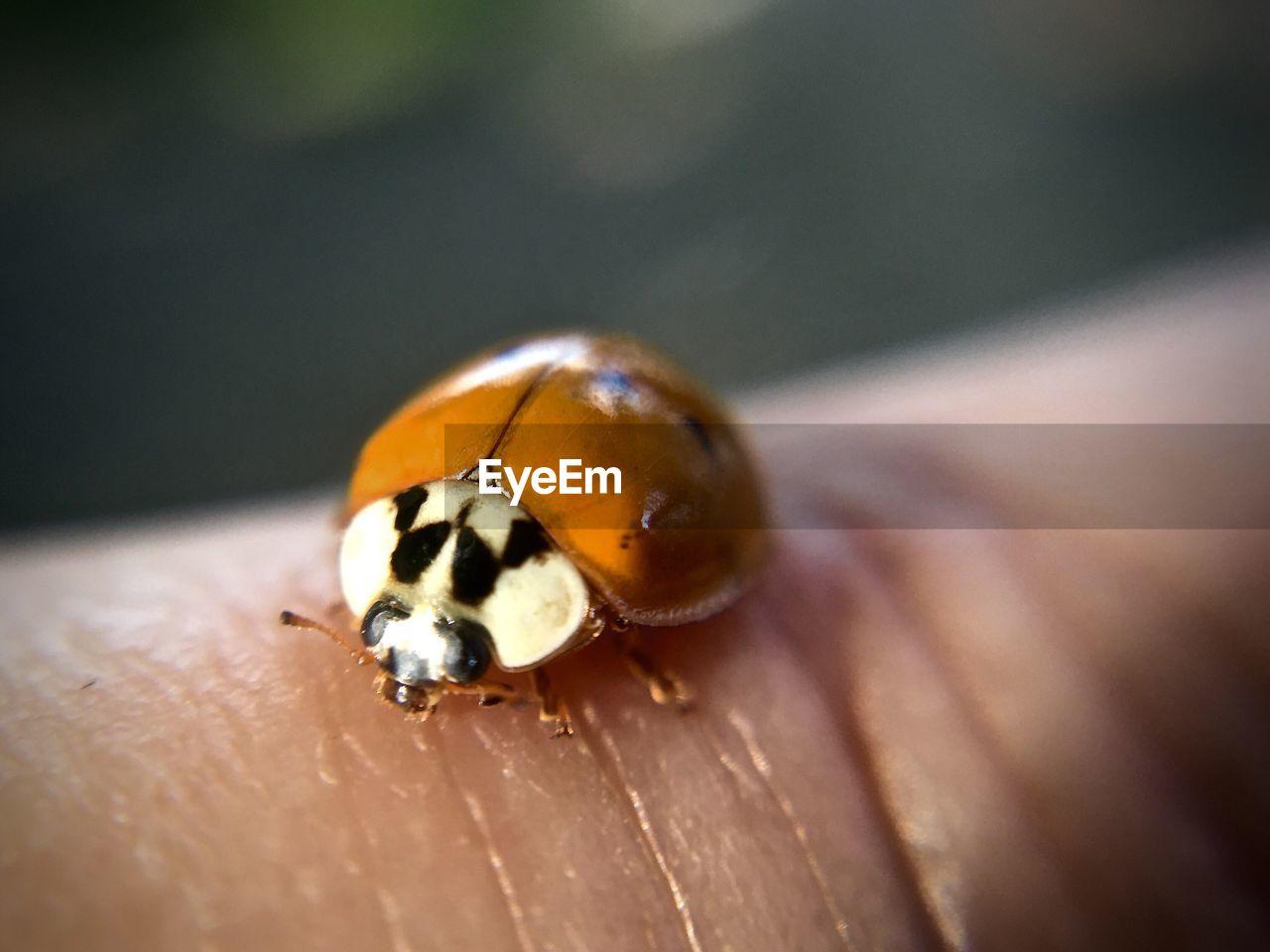 Cropped Hand With Ladybug