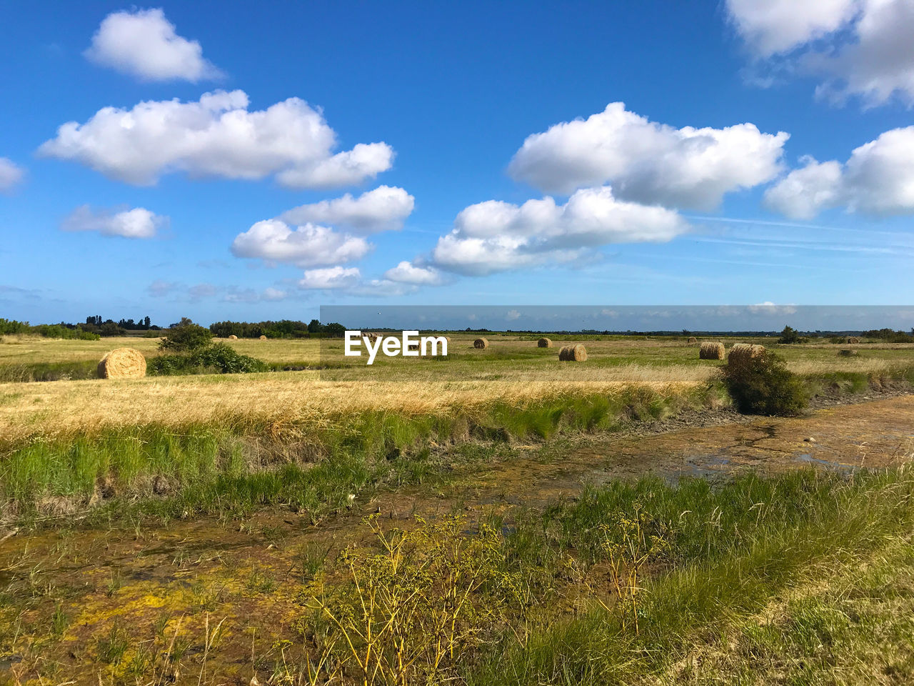 land, environment, field, landscape, sky, plant, grass, tranquil scene, tranquility, cloud - sky, nature, beauty in nature, scenics - nature, day, no people, agriculture, bale, rural scene, growth, non-urban scene, outdoors