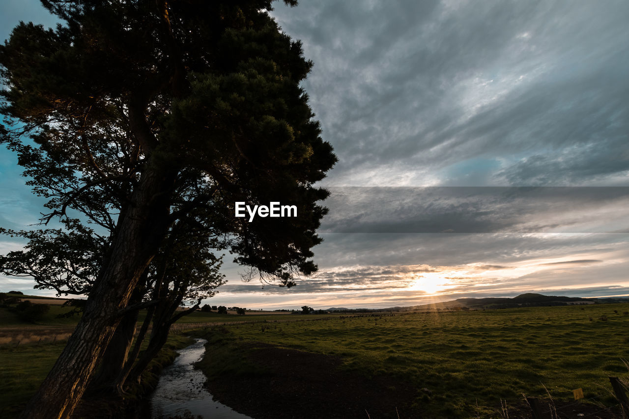 nature, beauty in nature, tranquil scene, tree, scenics, landscape, tranquility, field, no people, sky, cloud - sky, outdoors, growth, sunset, rural scene, water, day, grass