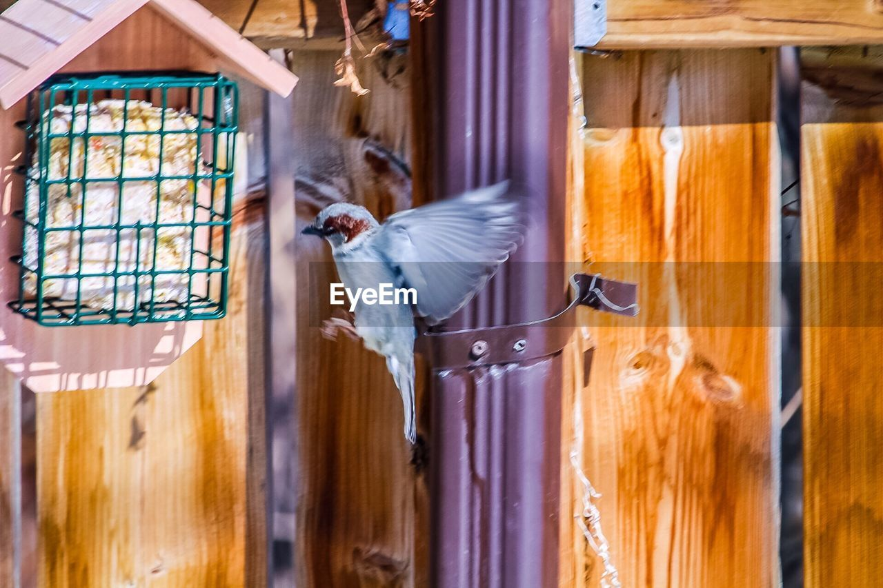 bird, vertebrate, animal themes, animal, animal wildlife, animals in the wild, flying, wood - material, group of animals, no people, animals in captivity, spread wings, motion, indoors, day, birdcage, cage, close-up, flapping