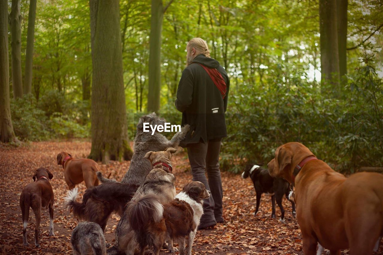 tree, forest, mammal, land, rear view, men, domestic animals, group of animals, people, plant, standing, day, real people, leisure activity, nature, adult, pets, lifestyles, outdoors, woodland, mature men
