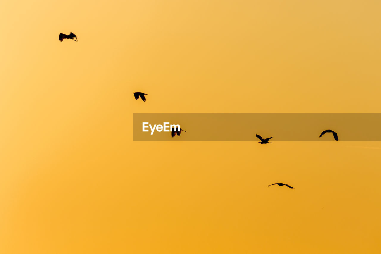 LOW ANGLE VIEW OF BIRDS FLYING AGAINST ORANGE SKY