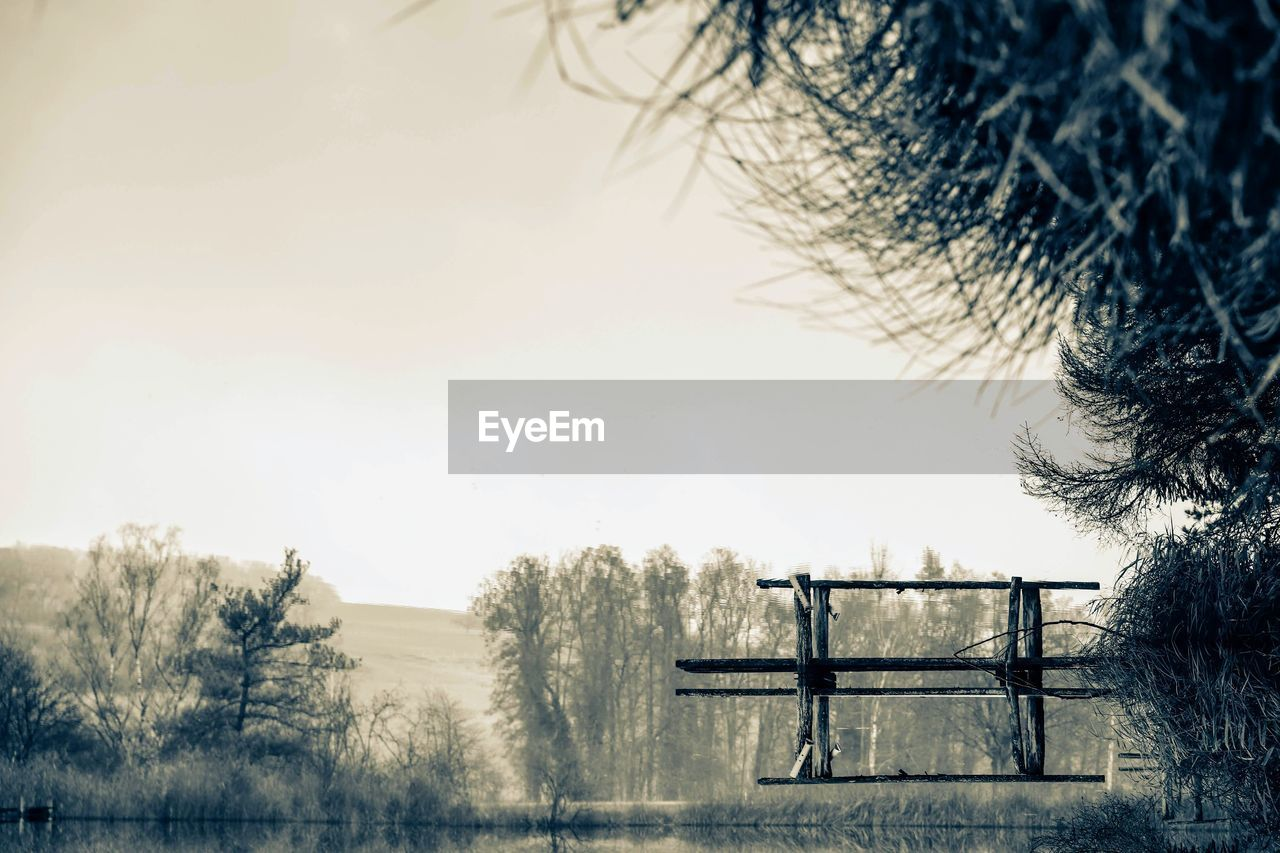 tree, sky, plant, nature, day, tranquility, no people, tranquil scene, outdoors, beauty in nature, bare tree, field, land, scenics - nature, cold temperature, winter, focus on foreground, copy space, seat