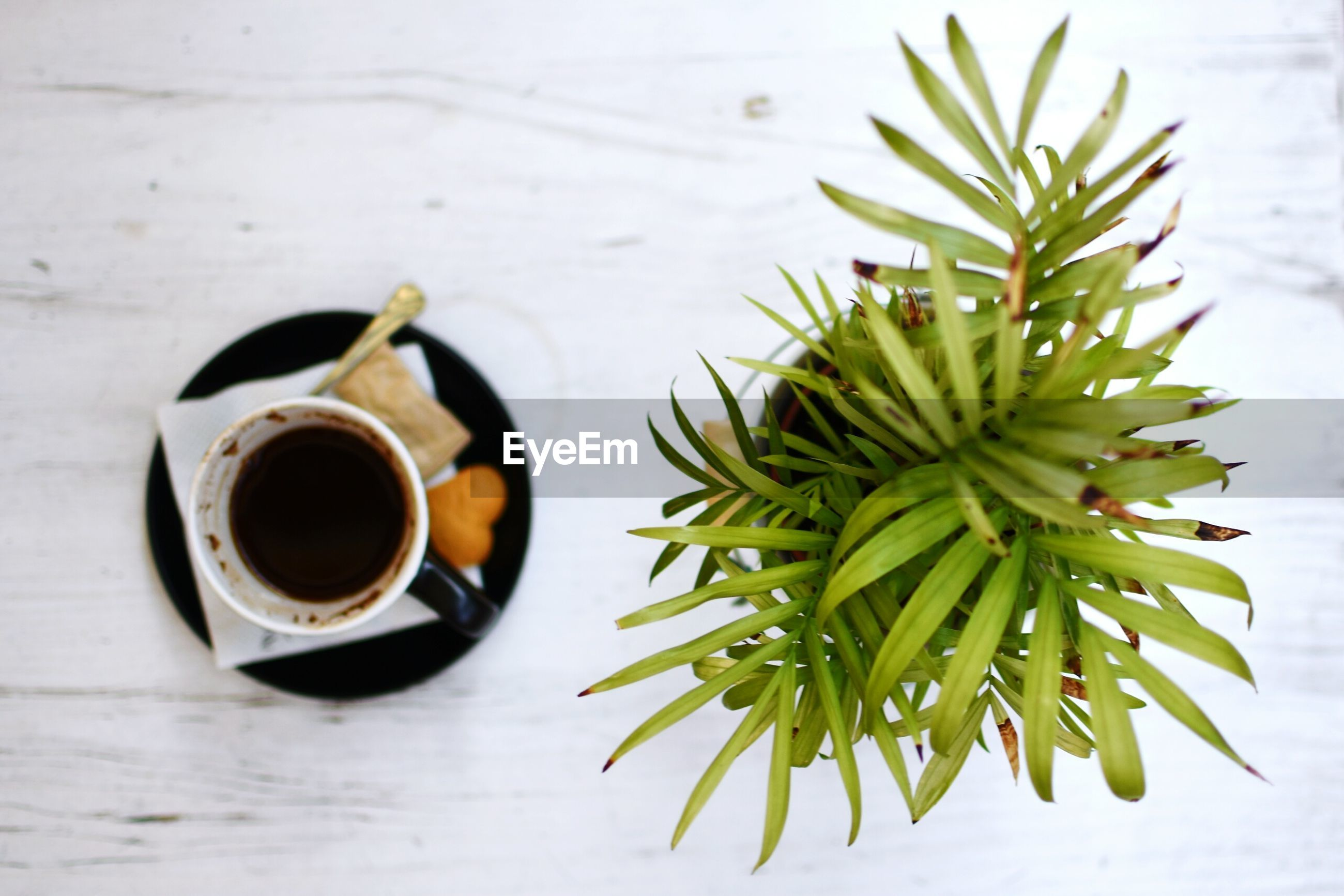 High angle view of black coffee by potted plant on table