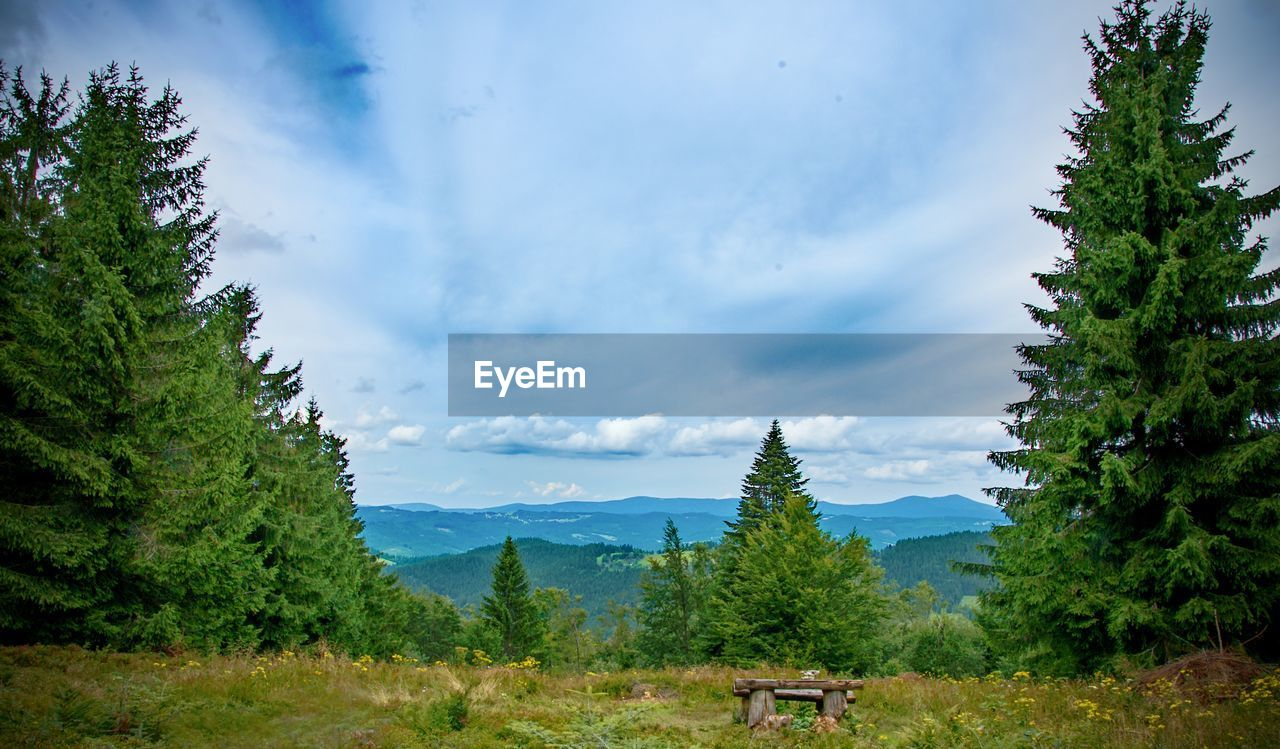 tree, plant, cloud - sky, beauty in nature, nature, scenics - nature, sky, green color, tranquility, growth, tranquil scene, non-urban scene, mountain, day, no people, environment, transportation, land, outdoors, landscape, pine tree, coniferous tree, fir tree