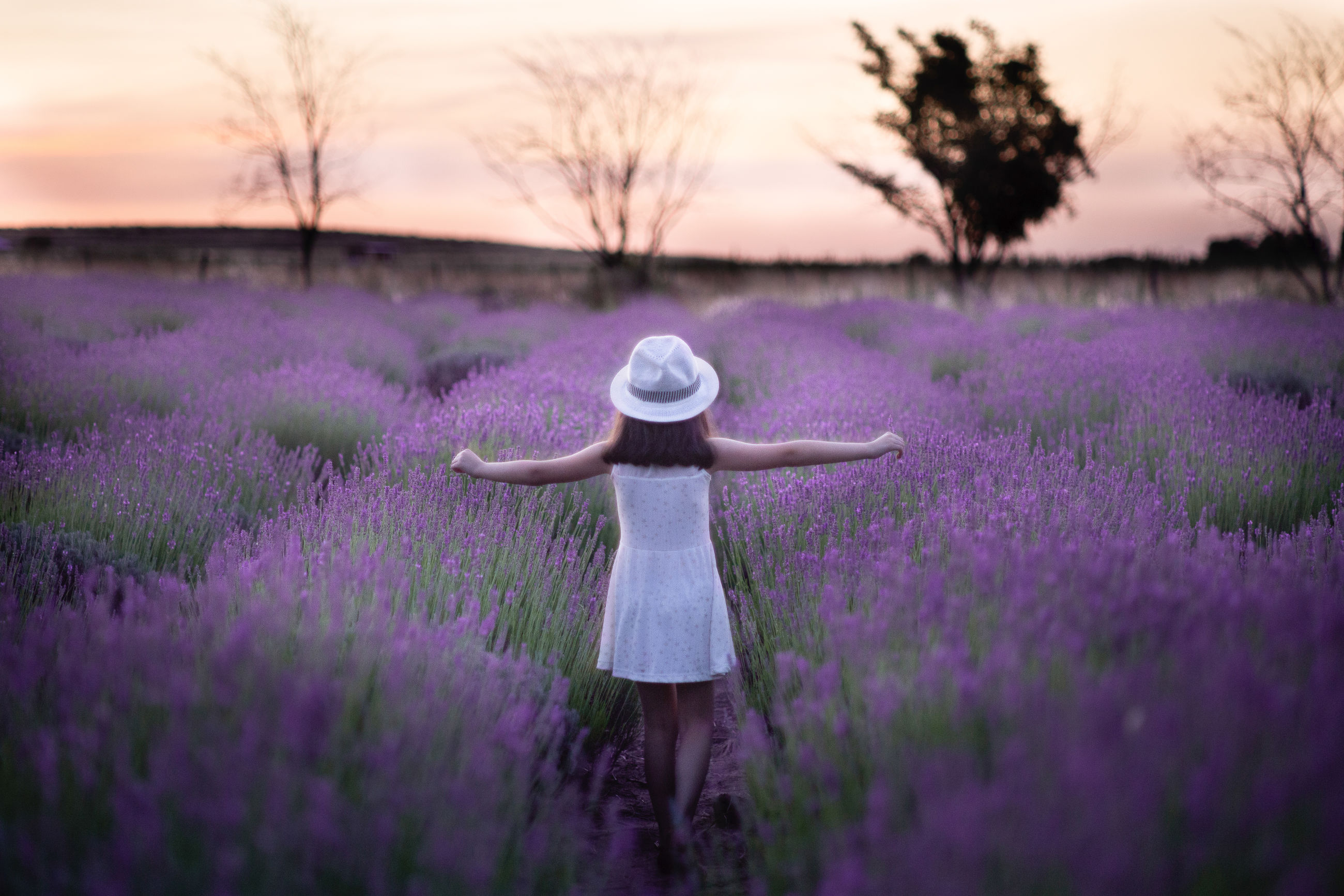 Rear view of girl standing amidst lavenders during sunset