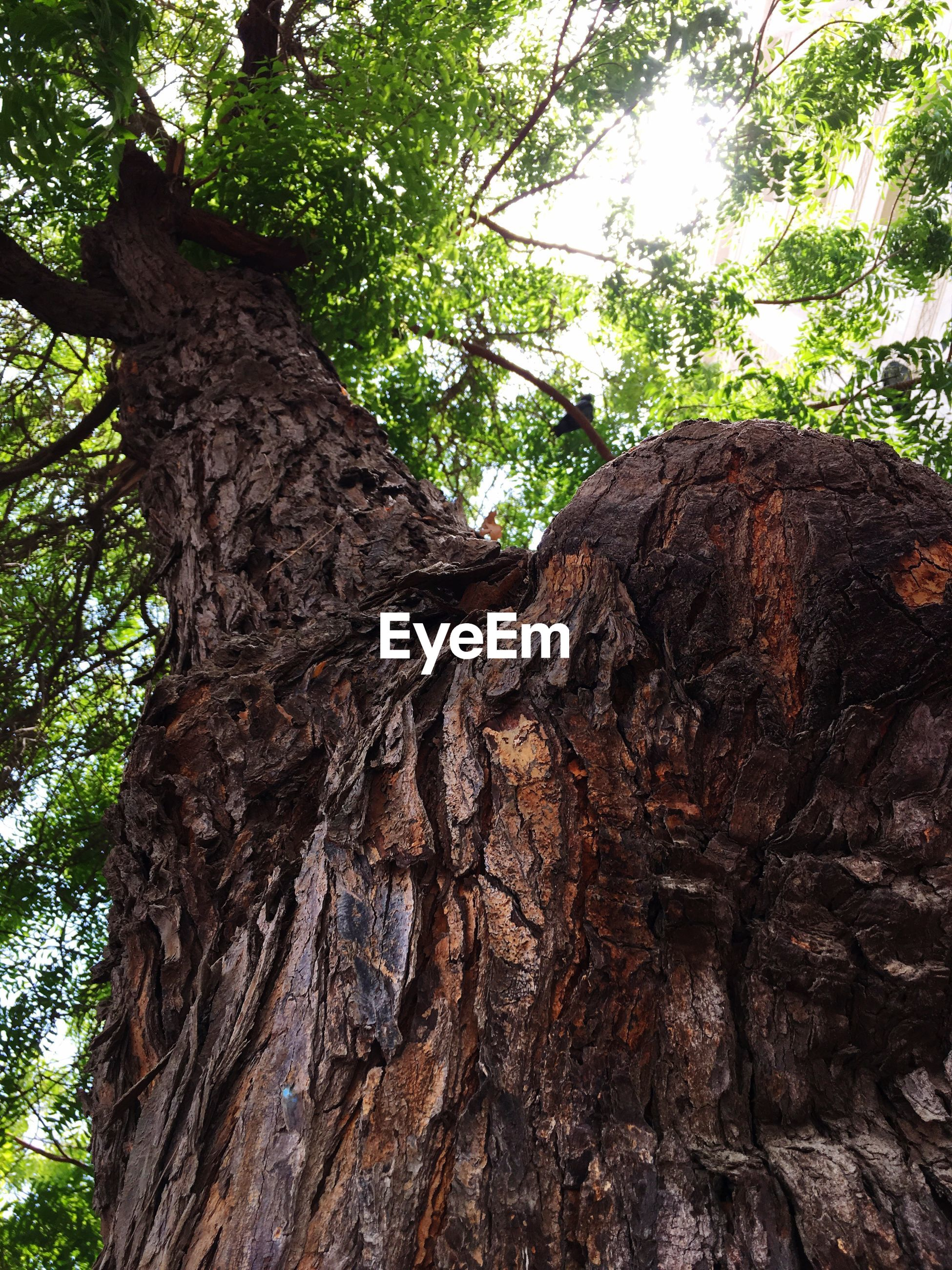 tree, tree trunk, low angle view, nature, textured, day, growth, no people, bark, outdoors, beauty in nature, rough, branch, close-up, sky