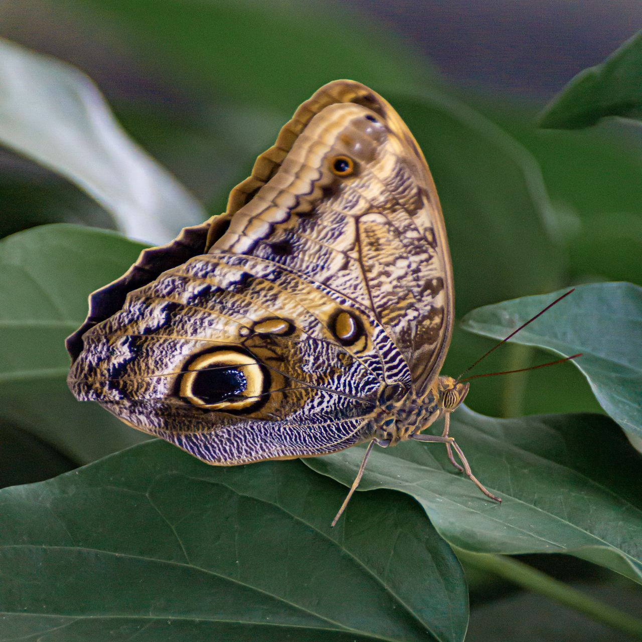 one animal, animal themes, plant part, animal, leaf, close-up, animals in the wild, animal wildlife, focus on foreground, green color, vertebrate, plant, no people, animal body part, nature, reptile, zoology, day, insect, outdoors, animal head, butterfly - insect, butterfly, animal eye