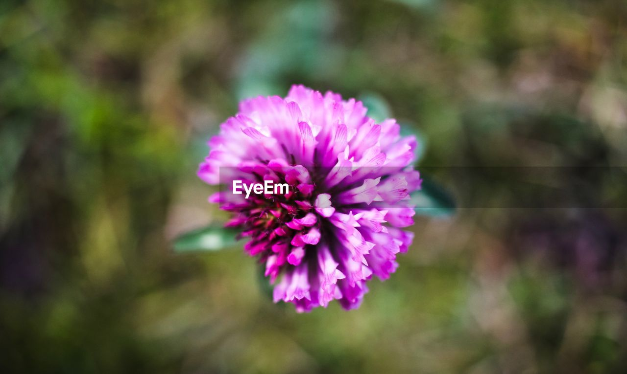 flower, flowering plant, fragility, vulnerability, freshness, beauty in nature, plant, petal, flower head, growth, inflorescence, pink color, close-up, nature, focus on foreground, purple, day, no people, outdoors