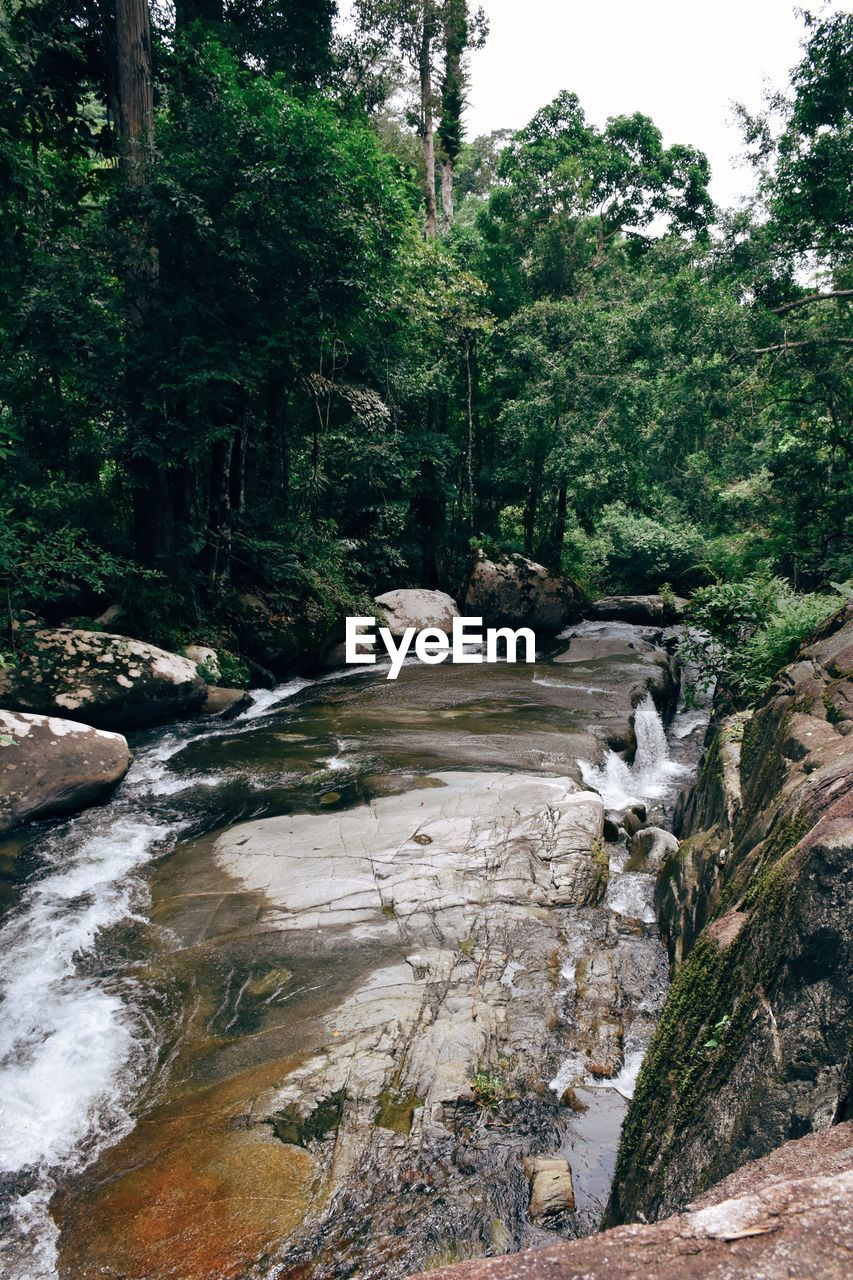 waterfall, tree, stream, nature, flowing water, rock - object, forest, water, outdoors, tranquil scene, rock, tranquility, motion, day, beauty in nature, scenics, no people