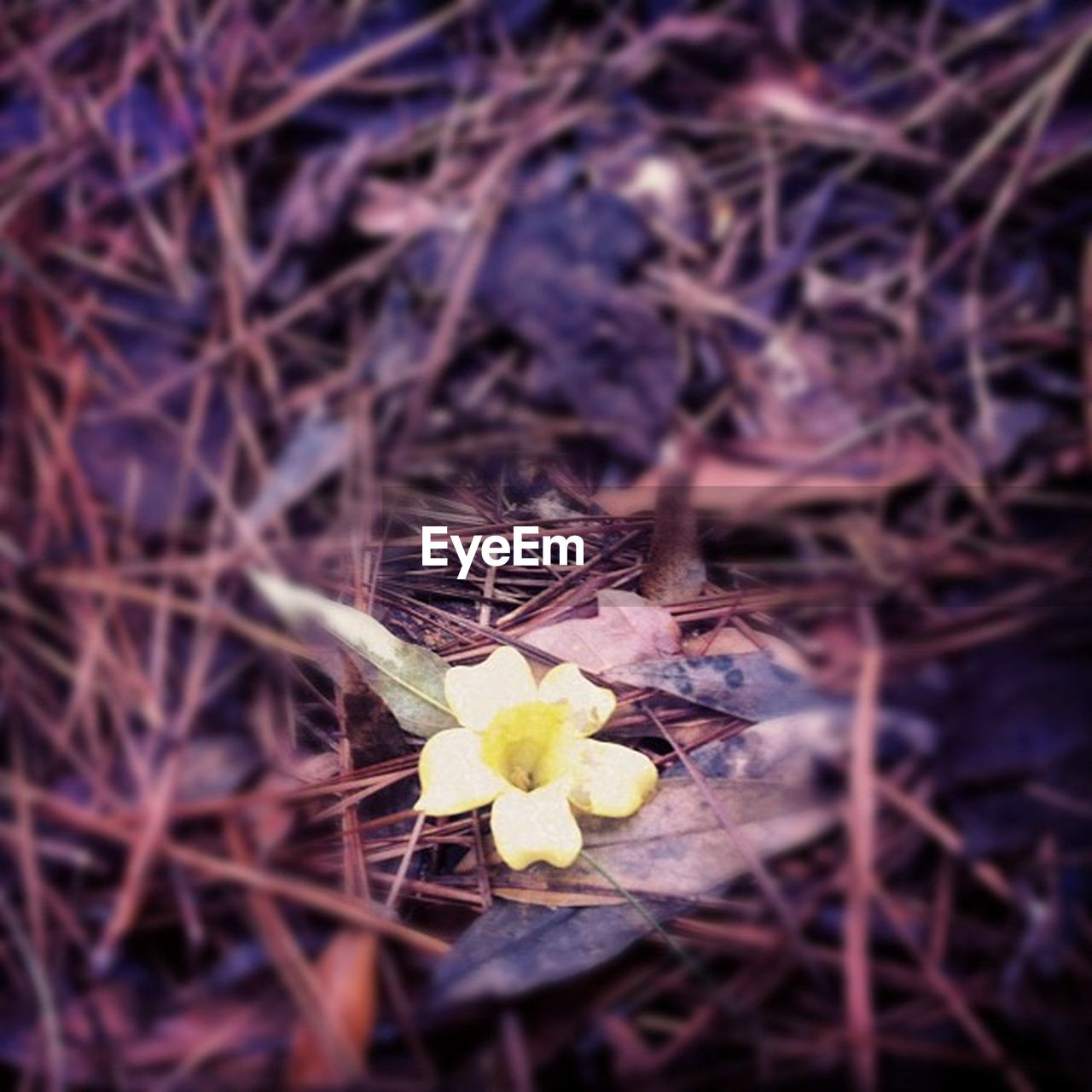 flower, fragility, nature, bird nest, no people, close-up, outdoors, day, growth, beauty in nature, flower head