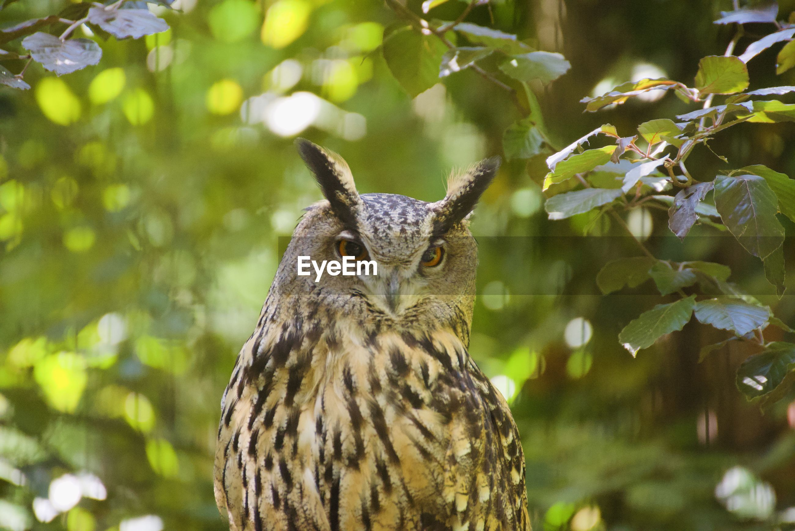 CLOSE-UP PORTRAIT OF OWL AGAINST TREE
