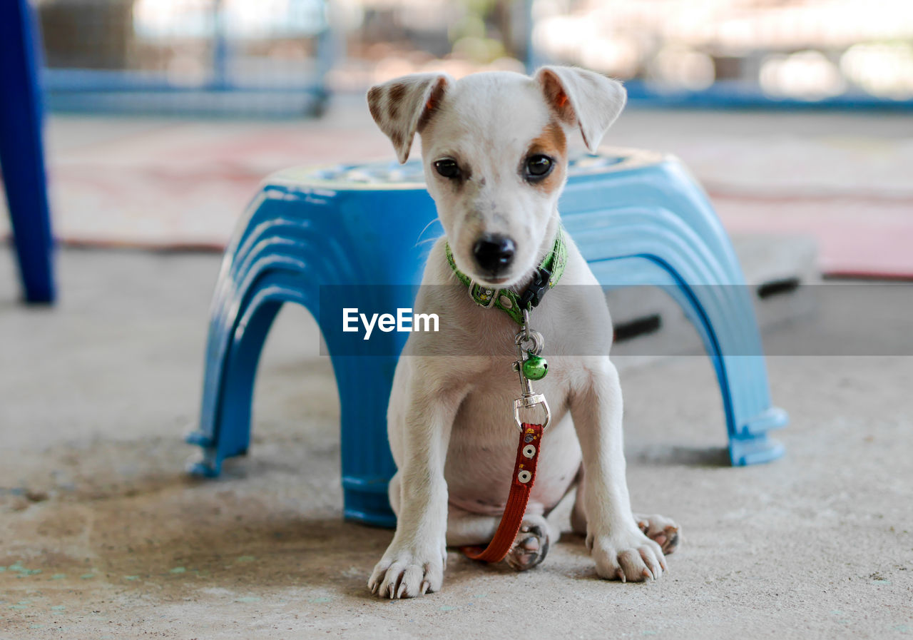 Portrait of dog with pet leash sitting outdoors
