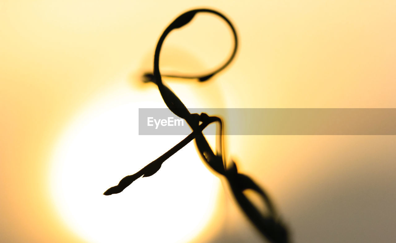 close-up, no people, still life, indoors, selective focus, eyeglasses, nature, glasses, orange color, copy space, glass - material, focus on foreground, sunset, personal accessory, sky, plant, silhouette, studio shot, tree, transparent