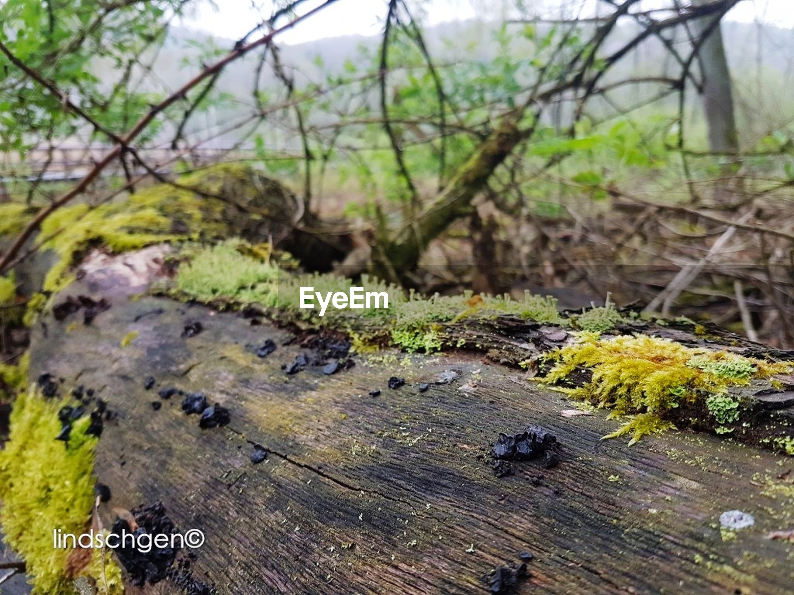 nature, no people, tree, outdoors, growth, wood - material, focus on foreground, day, tree trunk, close-up, beauty in nature