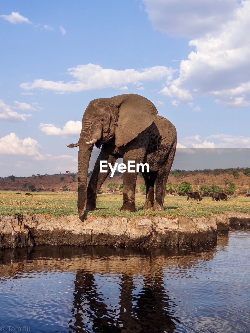 water, elephant, sky, nature, animal, cloud - sky, day, animal themes, mammal, no people, animal wildlife, landscape, plant, lake, animals in the wild, environment, grass, land, outdoors, african elephant, animal trunk, herbivorous, drinking