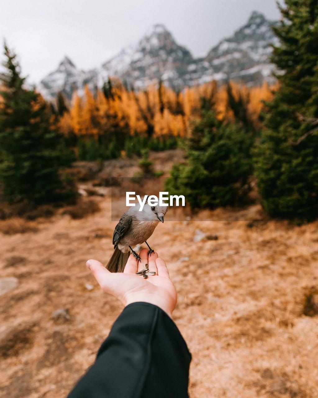 Cropped Hand Feeding Bird Against Trees