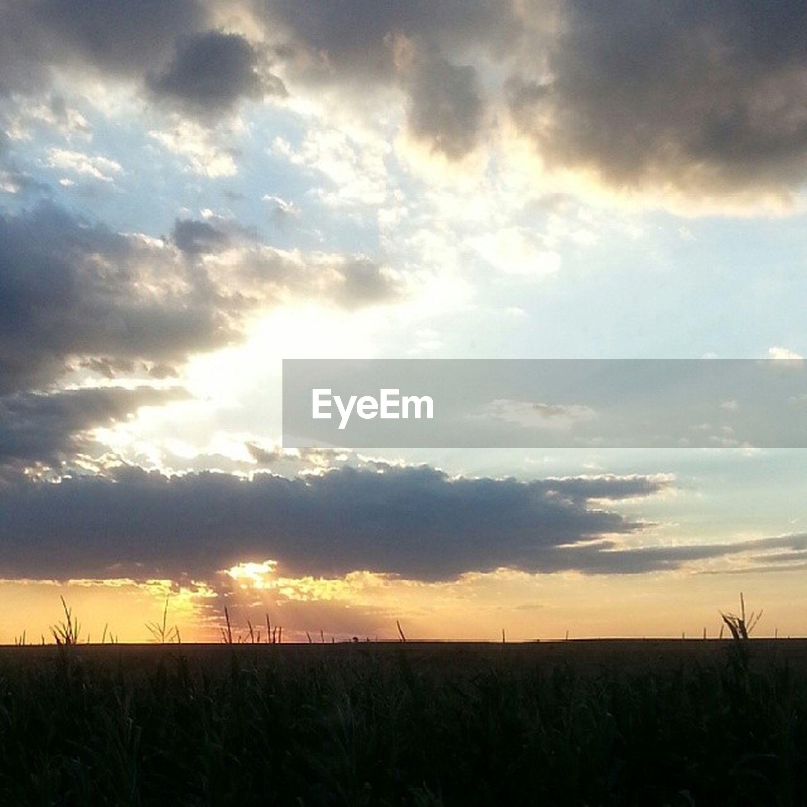 sunset, sky, tranquil scene, tranquility, scenics, landscape, beauty in nature, field, cloud - sky, nature, silhouette, idyllic, rural scene, cloud, cloudy, horizon over land, orange color, dramatic sky, agriculture, sun