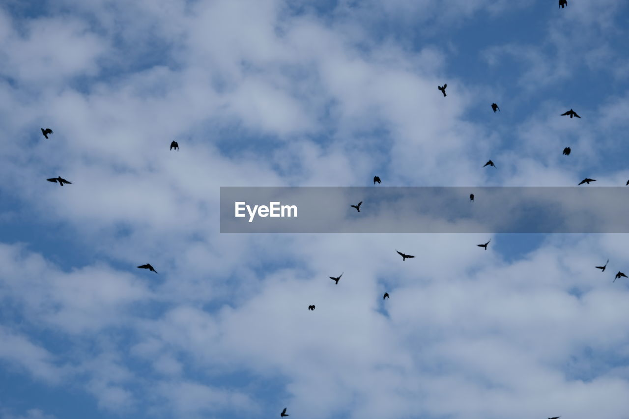 cloud - sky, vertebrate, sky, bird, animal themes, animal, low angle view, animal wildlife, group of animals, animals in the wild, flying, mid-air, large group of animals, nature, no people, flock of birds, beauty in nature, day, spread wings, motion, eagle