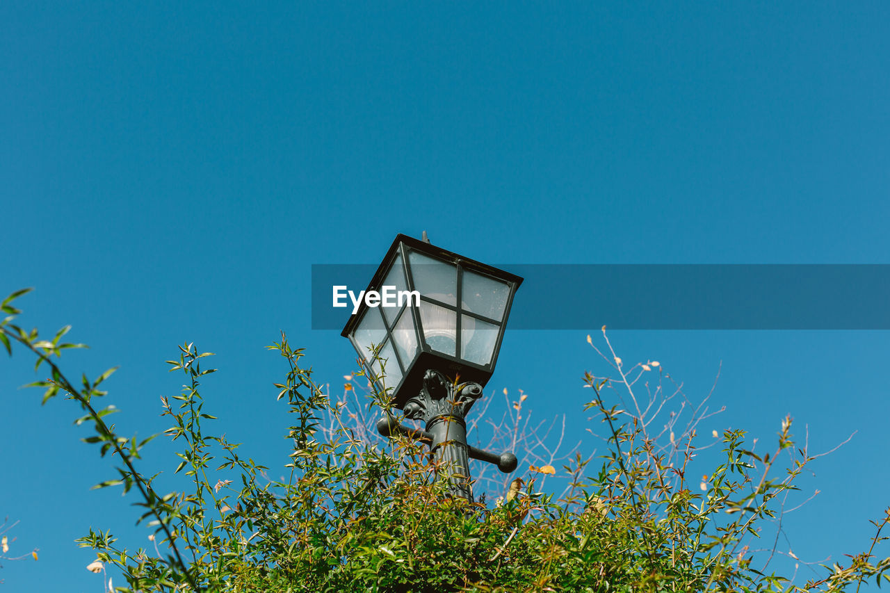 sky, plant, low angle view, blue, nature, clear sky, copy space, lighting equipment, day, growth, no people, built structure, architecture, technology, tree, outdoors, building exterior, street light, flowering plant, flower, electric lamp