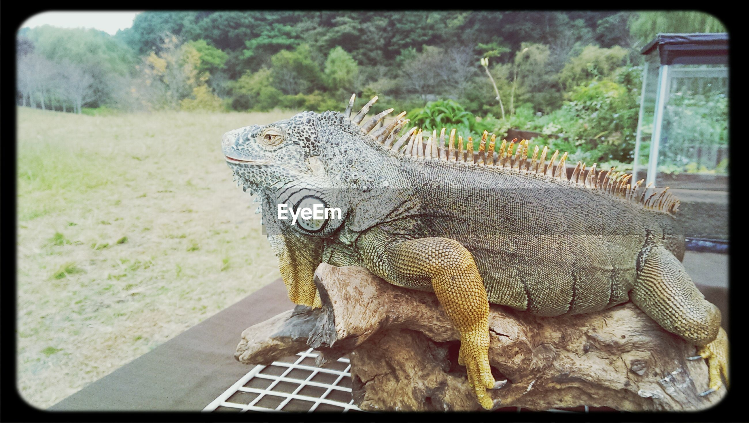 animal themes, one animal, transfer print, animals in the wild, wildlife, auto post production filter, animal head, close-up, animal body part, zoo, mammal, side view, animals in captivity, outdoors, focus on foreground, day, grass, no people, field, nature